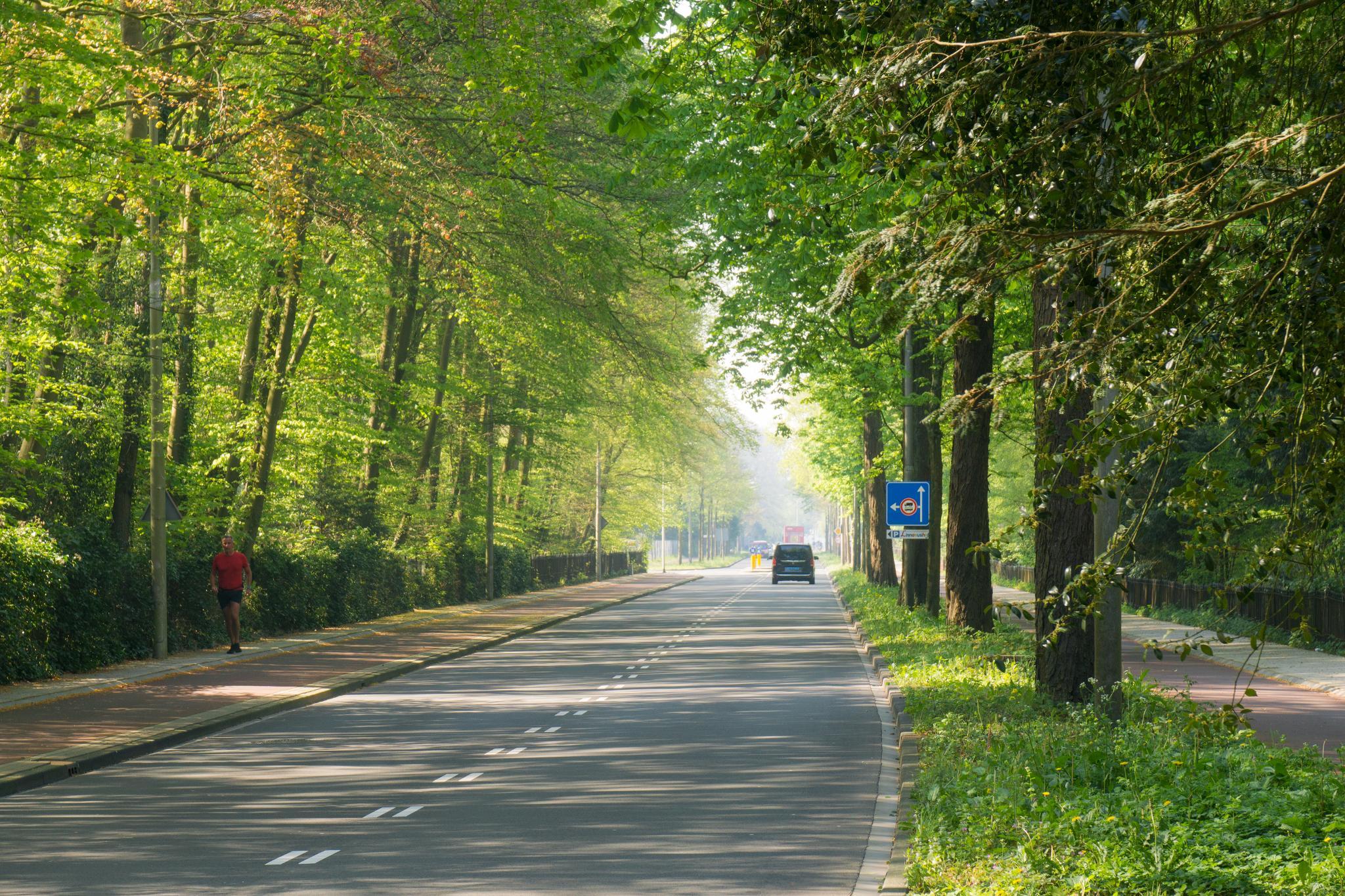 【荷蘭印象】花田嬉事:荷蘭單車花之路 1