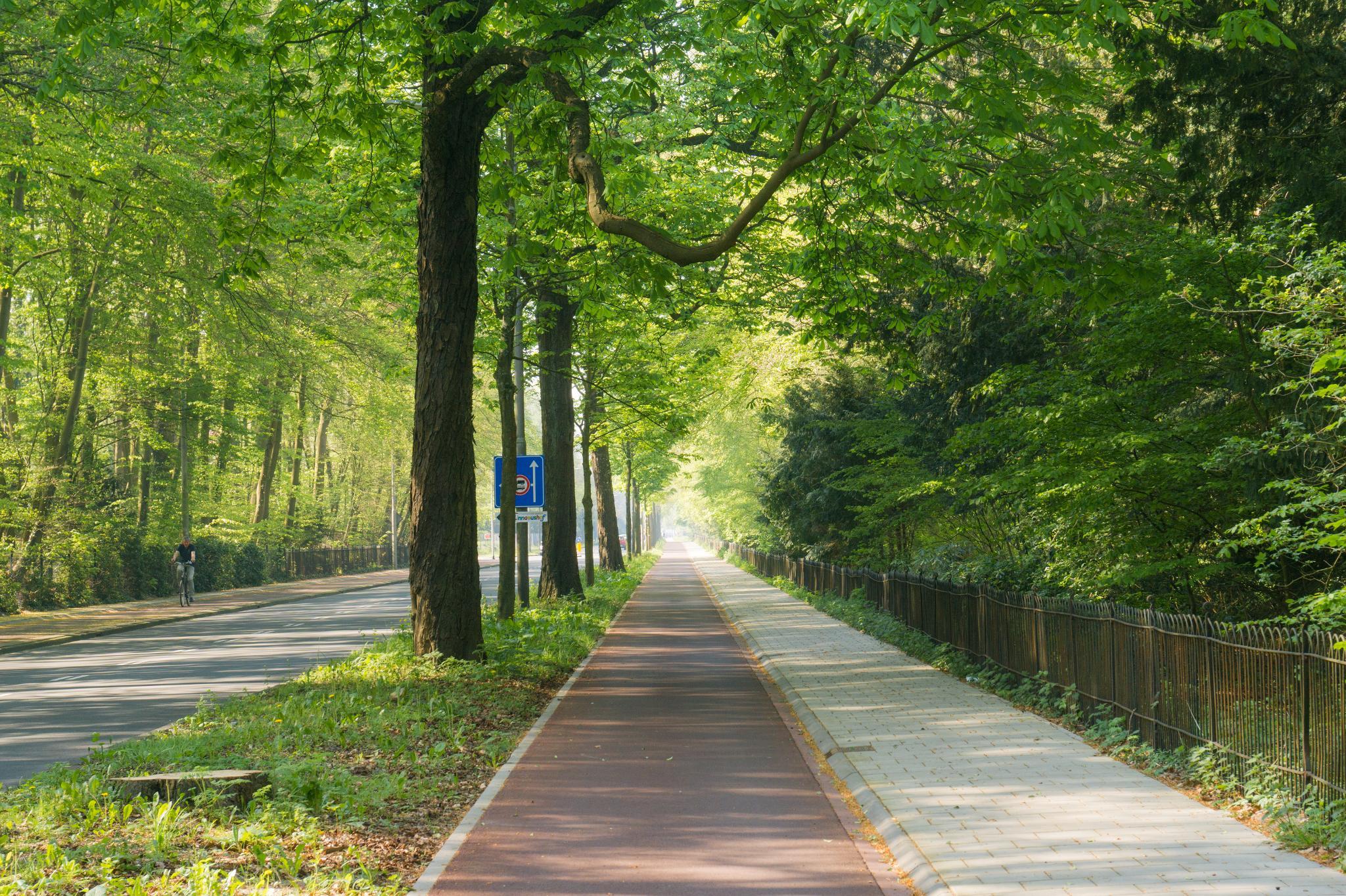 【荷蘭印象】花田嬉事:荷蘭單車花之路 2