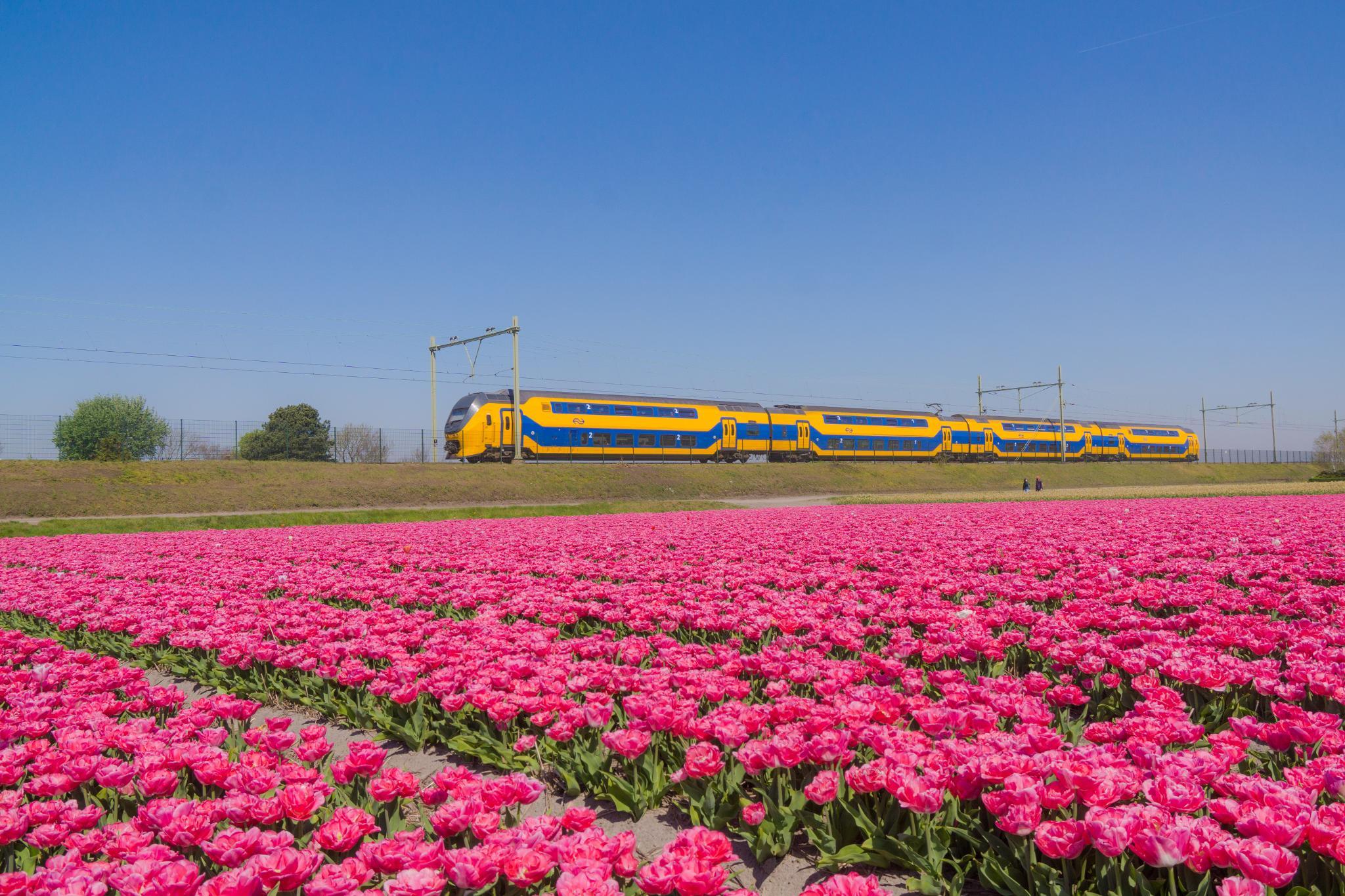 【荷蘭印象】花田嬉事:荷蘭單車花之路 13