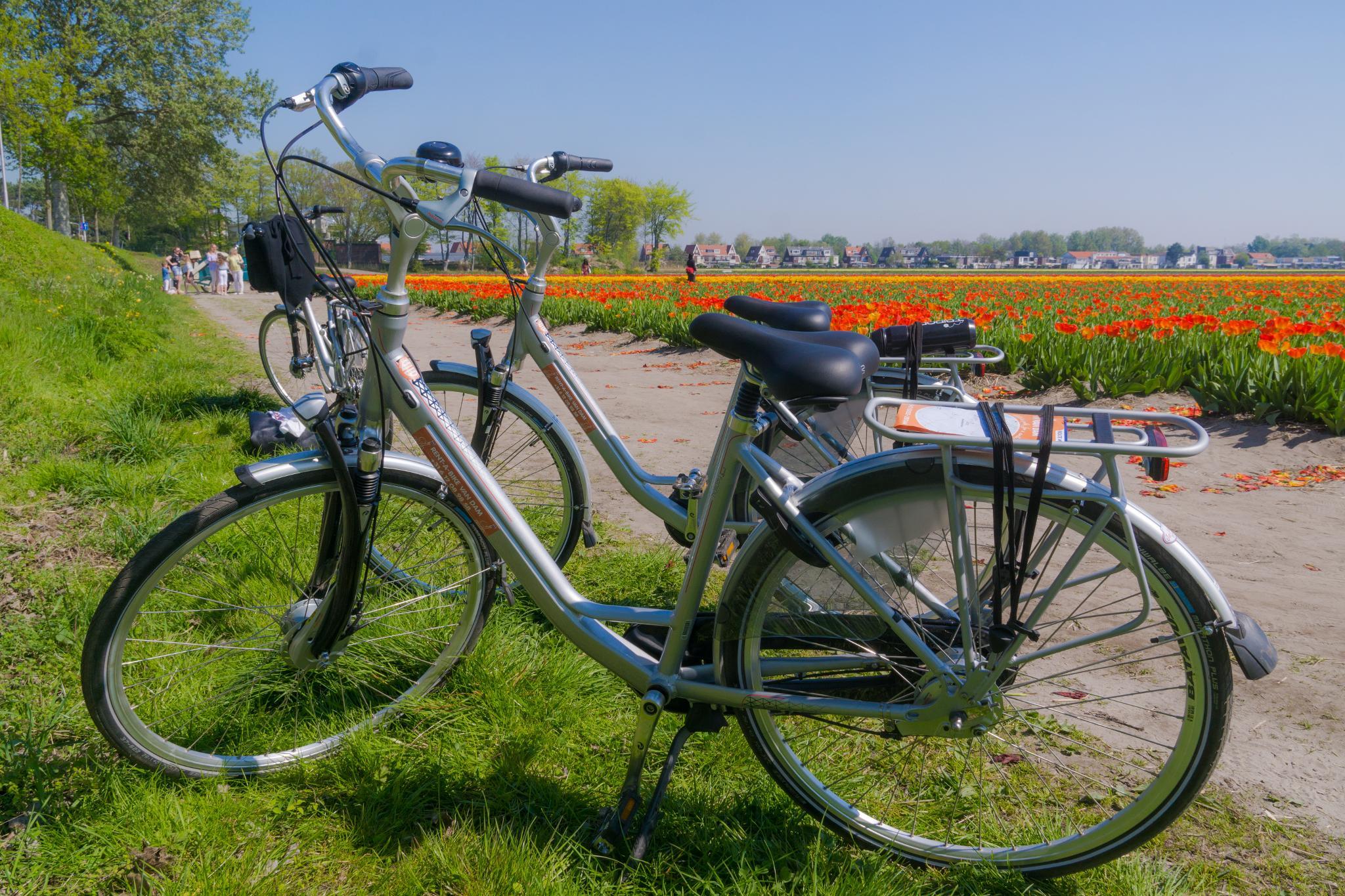 【荷蘭印象】花田嬉事:荷蘭單車花之路 20
