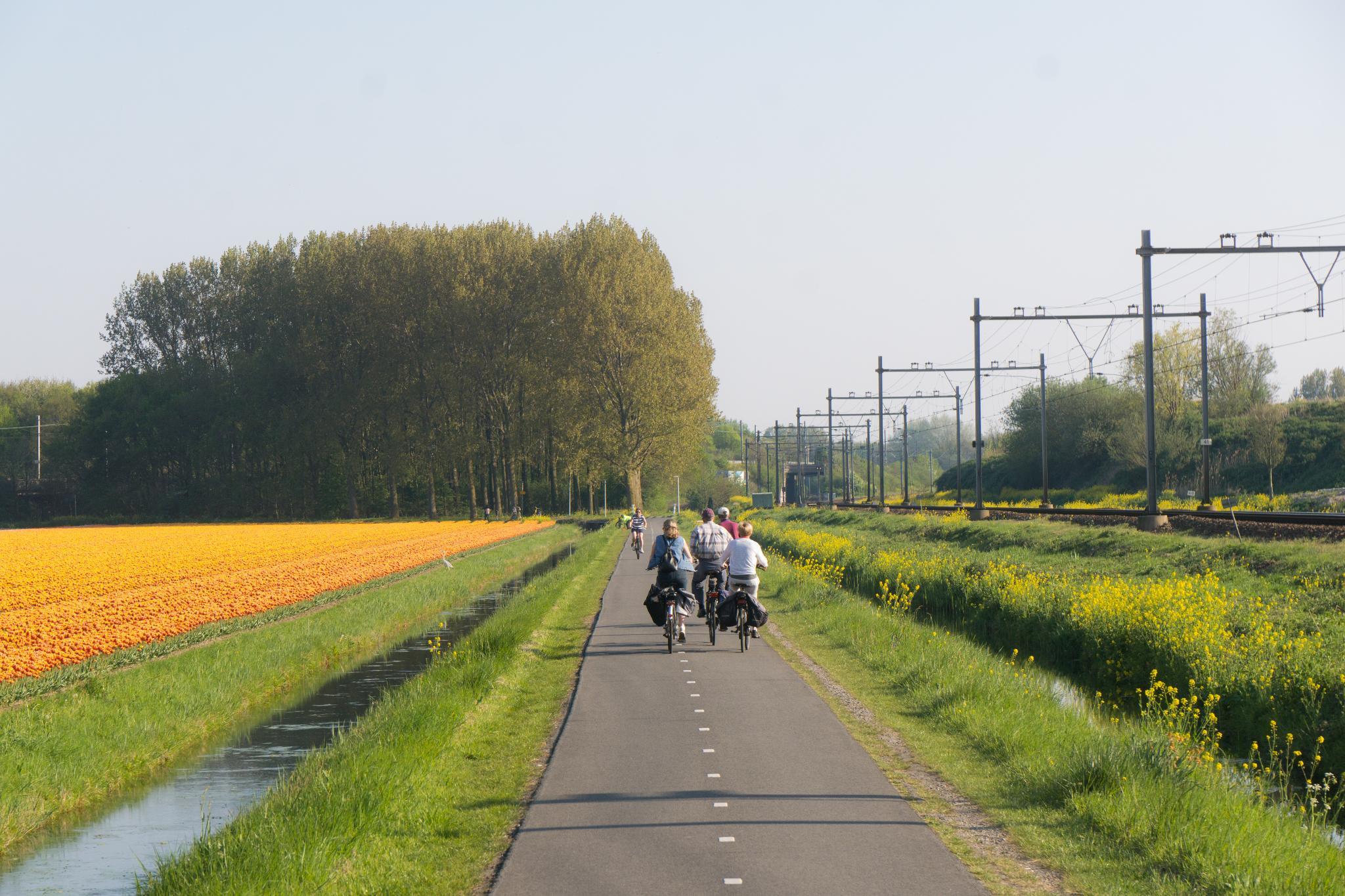 【荷蘭印象】花田嬉事:荷蘭單車花之路 52