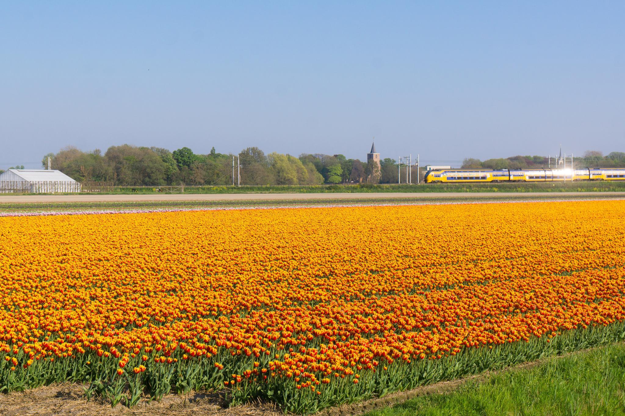 【荷蘭印象】花田嬉事:荷蘭單車花之路 53