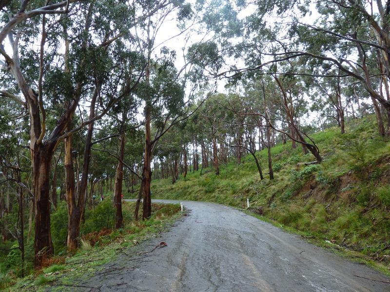 【澳洲】Great Ocean Road 壯闊絕美的南澳大洋路 10