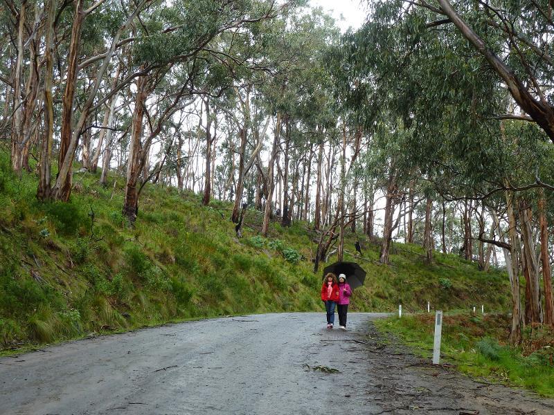 【澳洲】Great Ocean Road 壯闊絕美的南澳大洋路 11