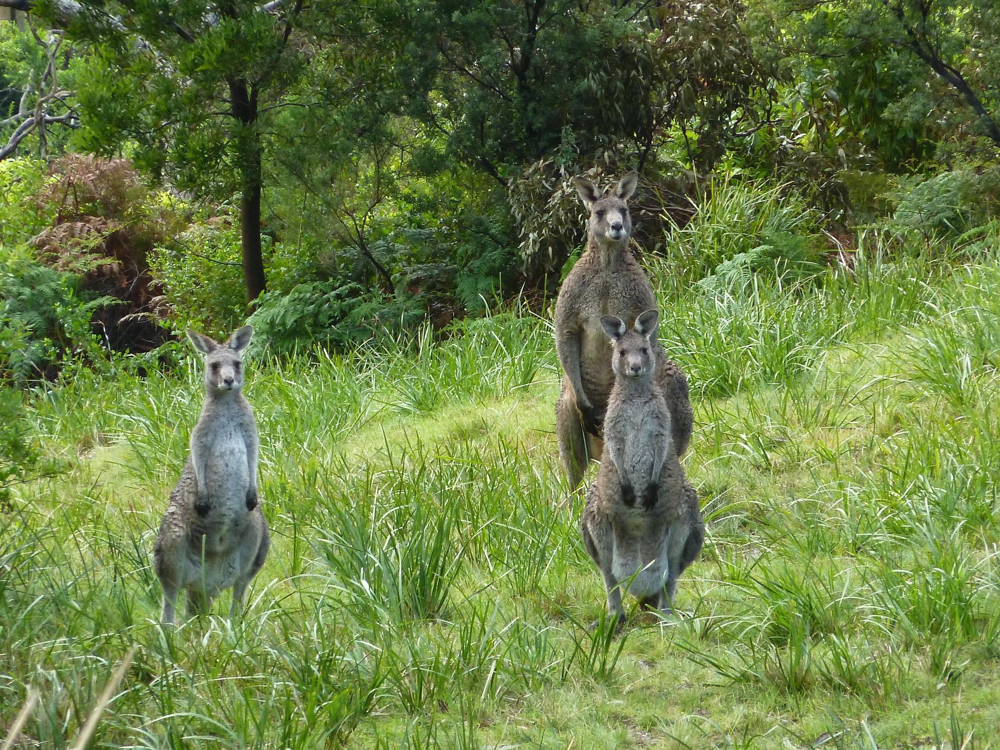 【澳洲】Great Ocean Road 壯闊絕美的南澳大洋路 9