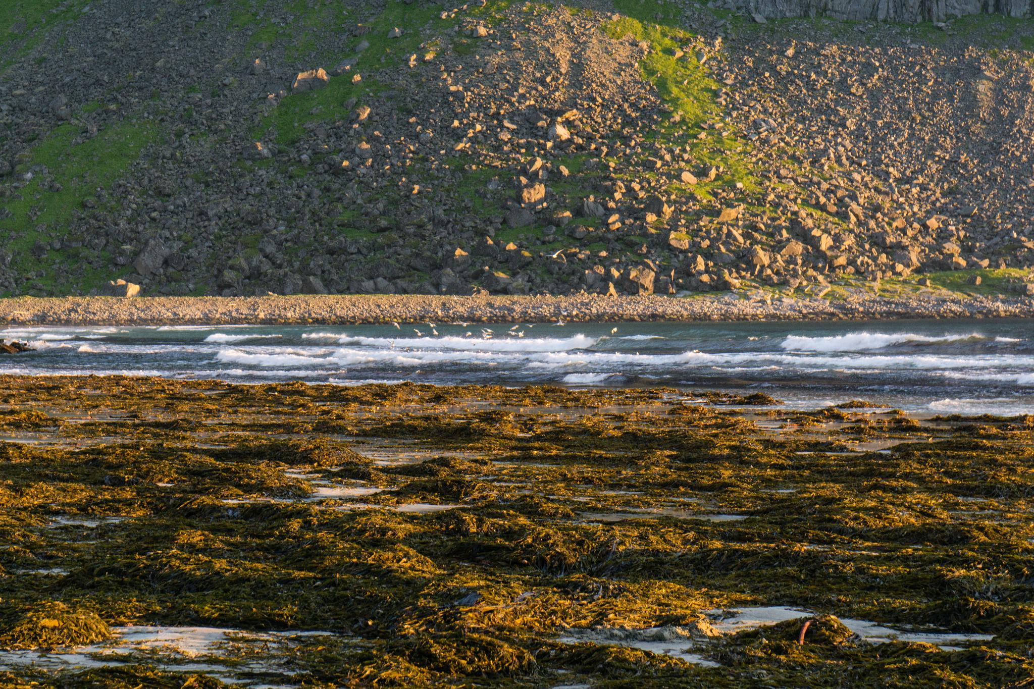 【羅弗敦群島】在世界的盡頭追逐午夜太陽 - Kvalvika Beach 25
