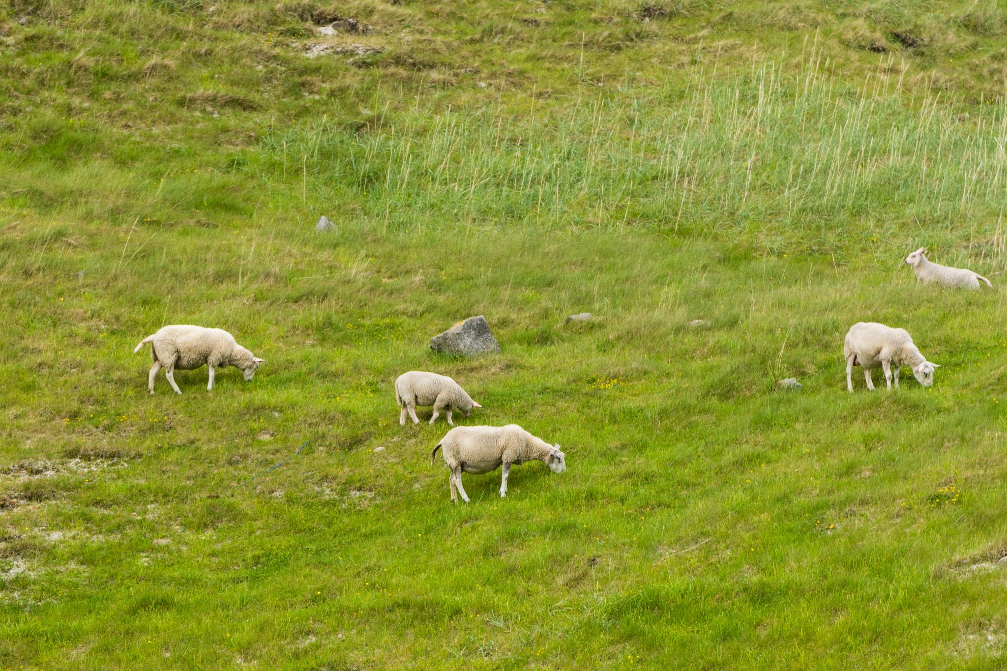 【羅弗敦群島】與羊共舞的人間仙境 - Uttakleiv Beach 與 Haukland Beach 55