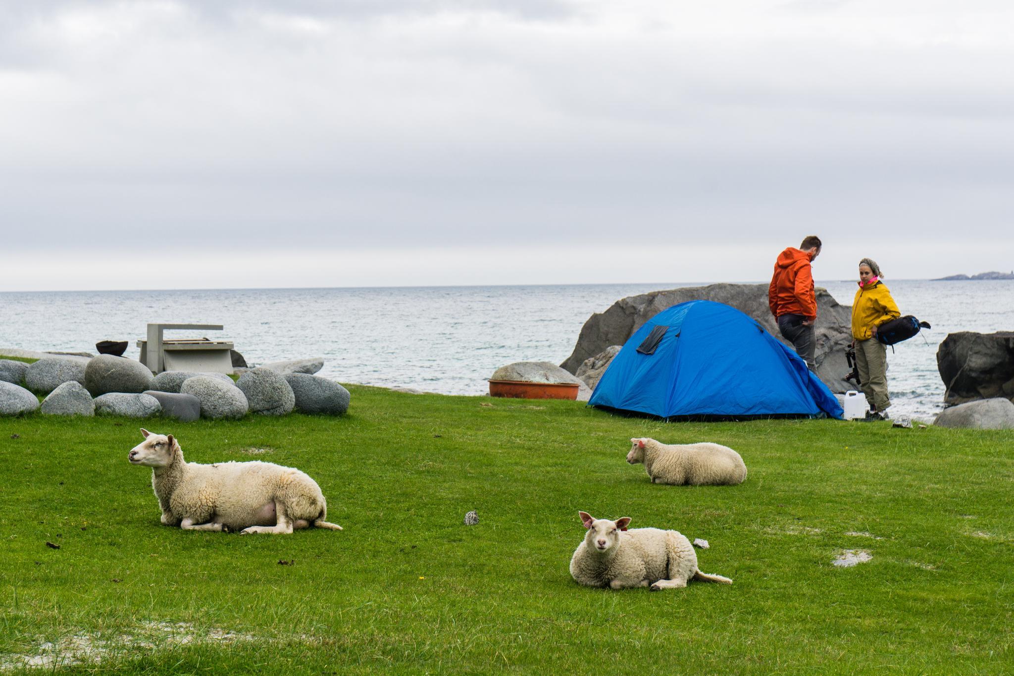 【羅弗敦群島】與羊共舞的人間仙境 - Uttakleiv Beach 與 Haukland Beach 58