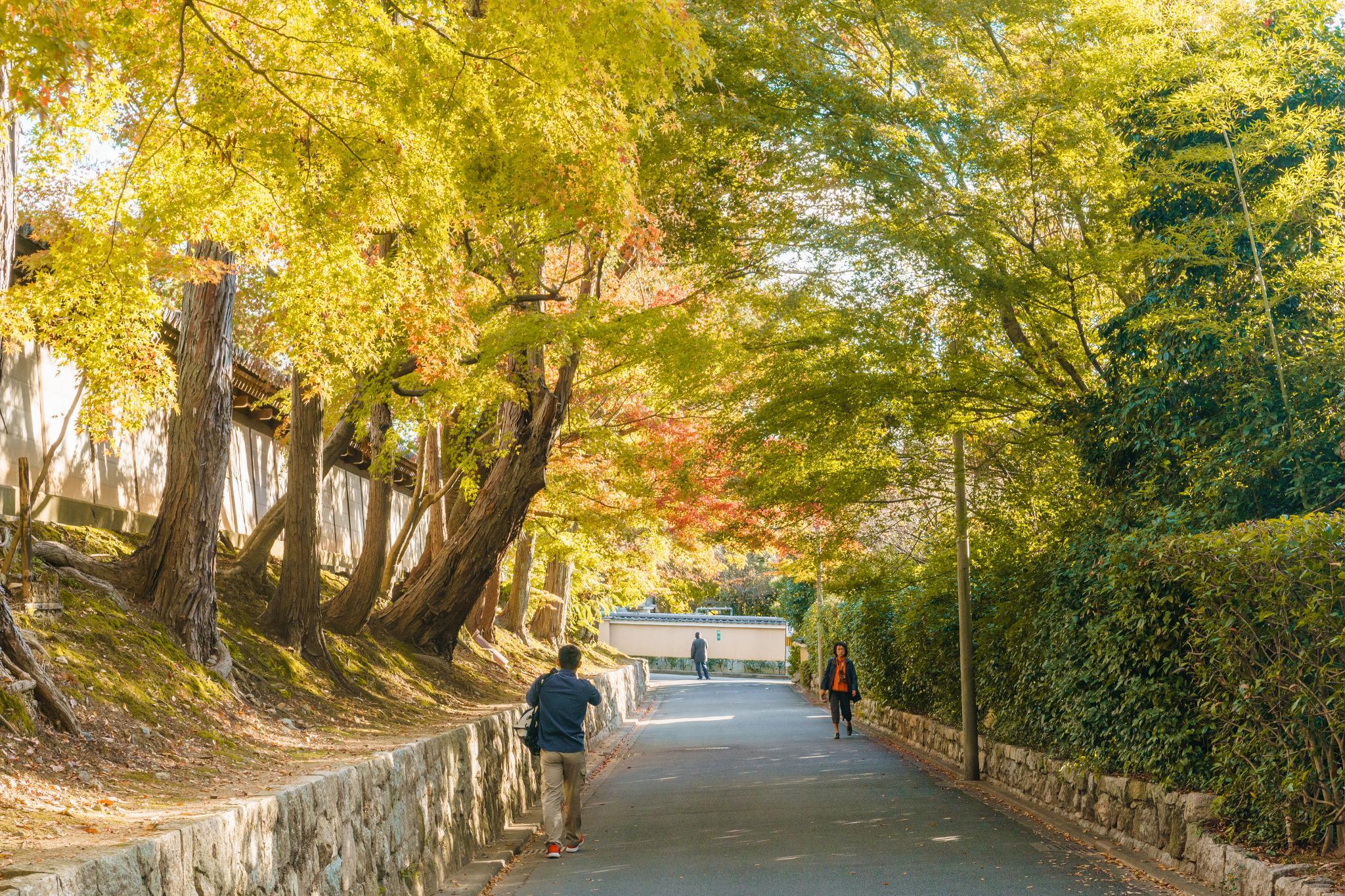 【京都】秋光葉影的古寺散策 - 南禪寺 78