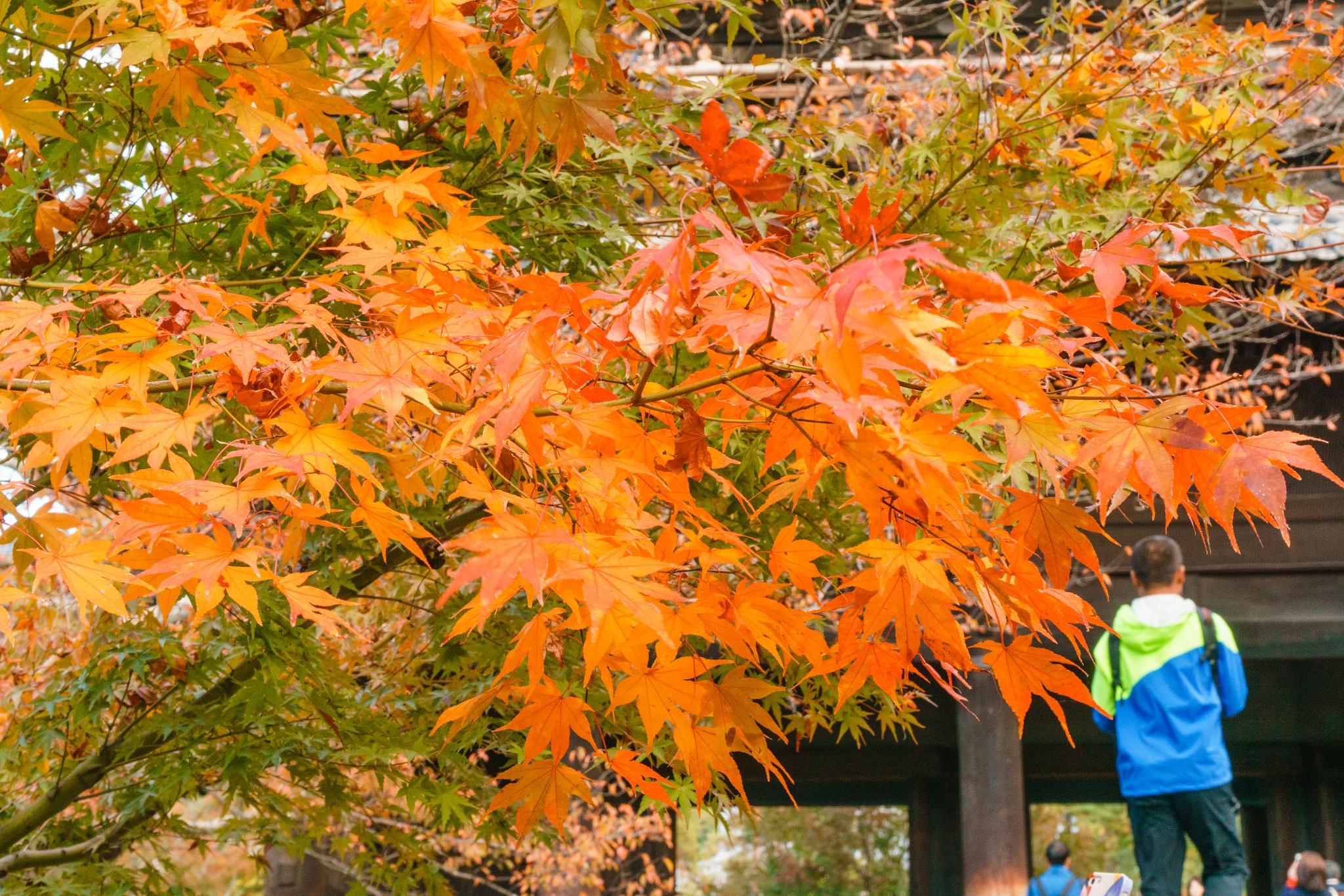 【京都】秋光葉影的古寺散策 - 南禪寺 90