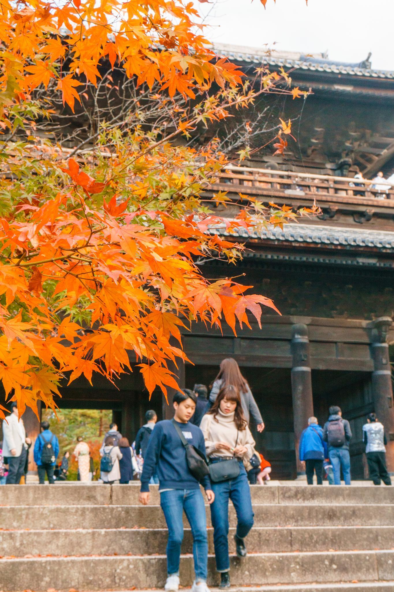【京都】秋光葉影的古寺散策 - 南禪寺 80