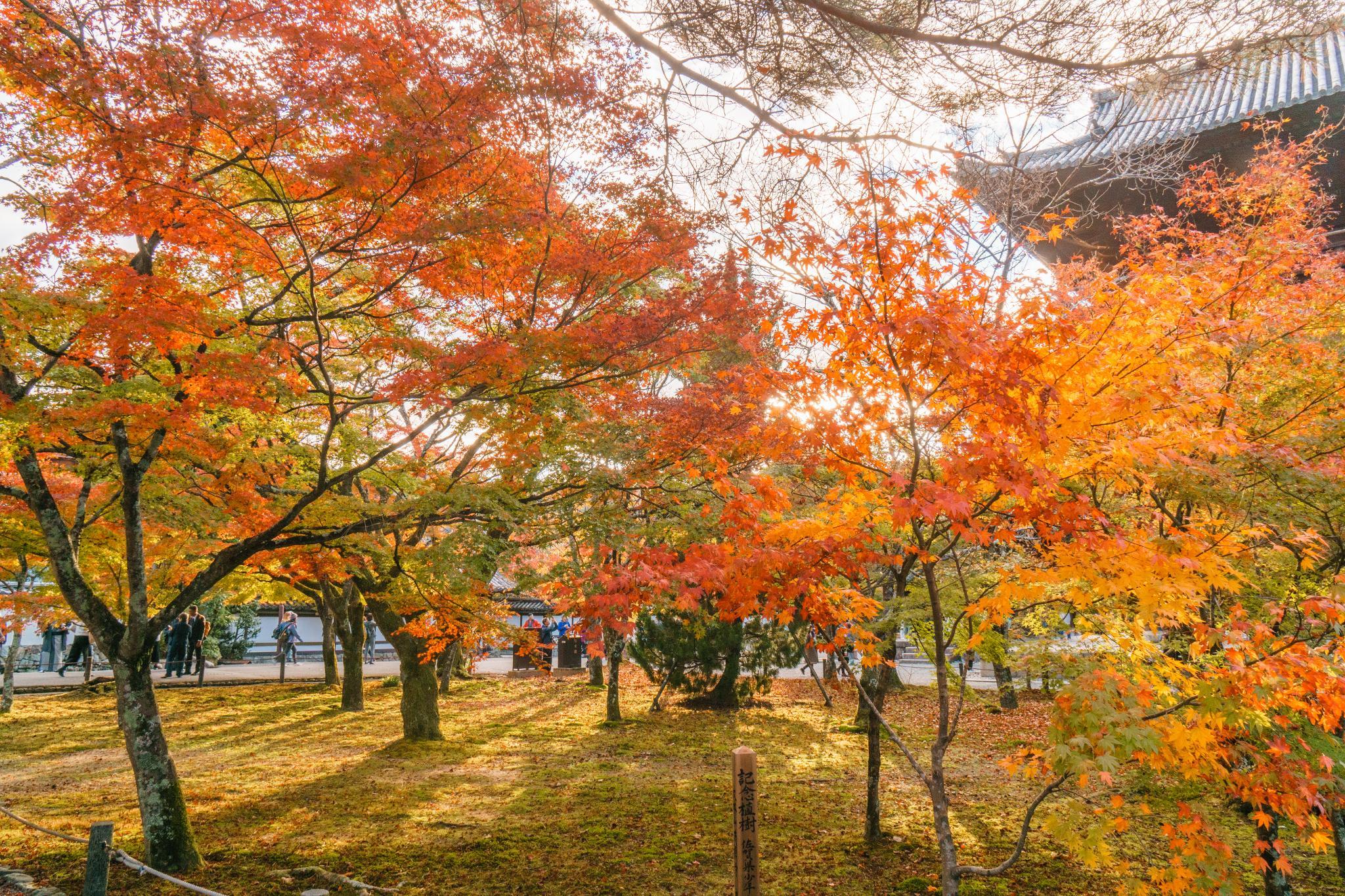 【京都】秋光葉影的古寺散策 - 南禪寺 84
