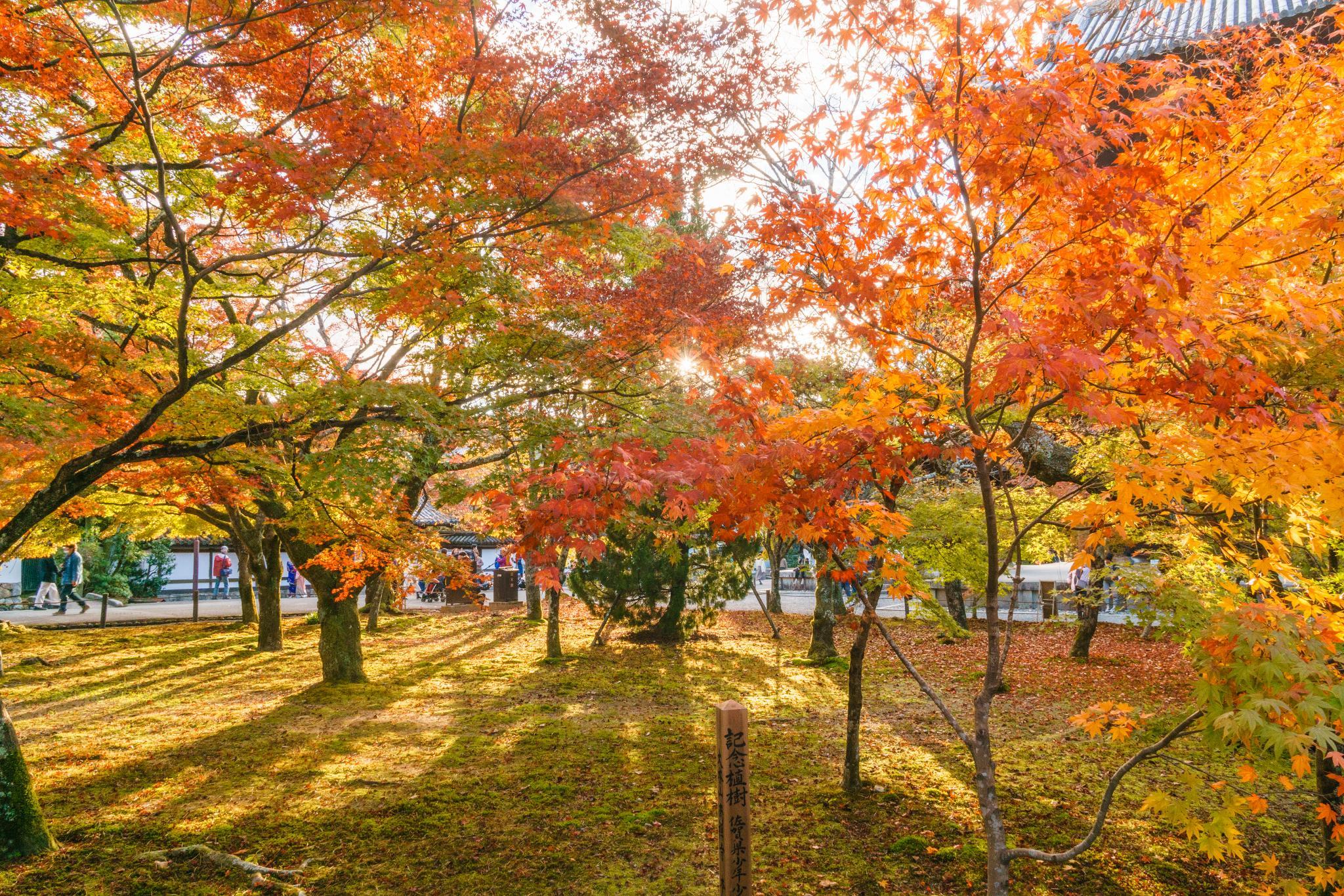 【京都】秋光葉影的古寺散策 - 南禪寺 85
