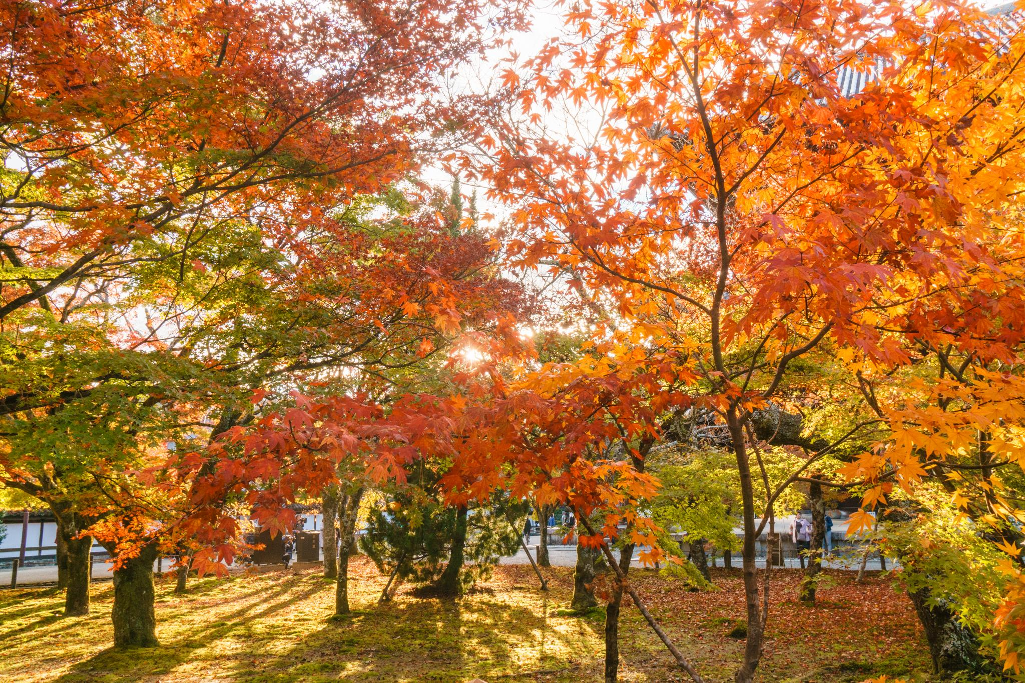 【京都】秋光葉影的古寺散策 - 南禪寺 86