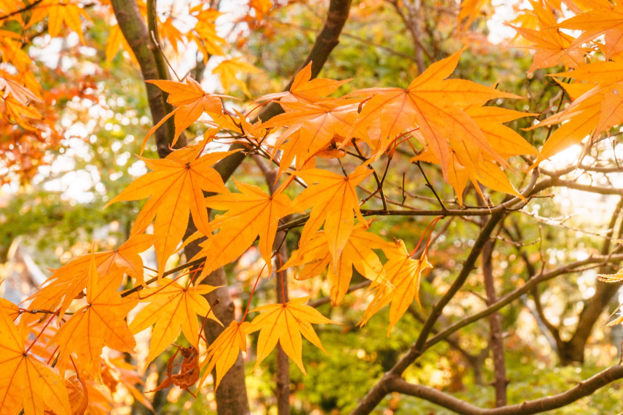 【京都】秋光葉影的古寺散策 - 南禪寺 89