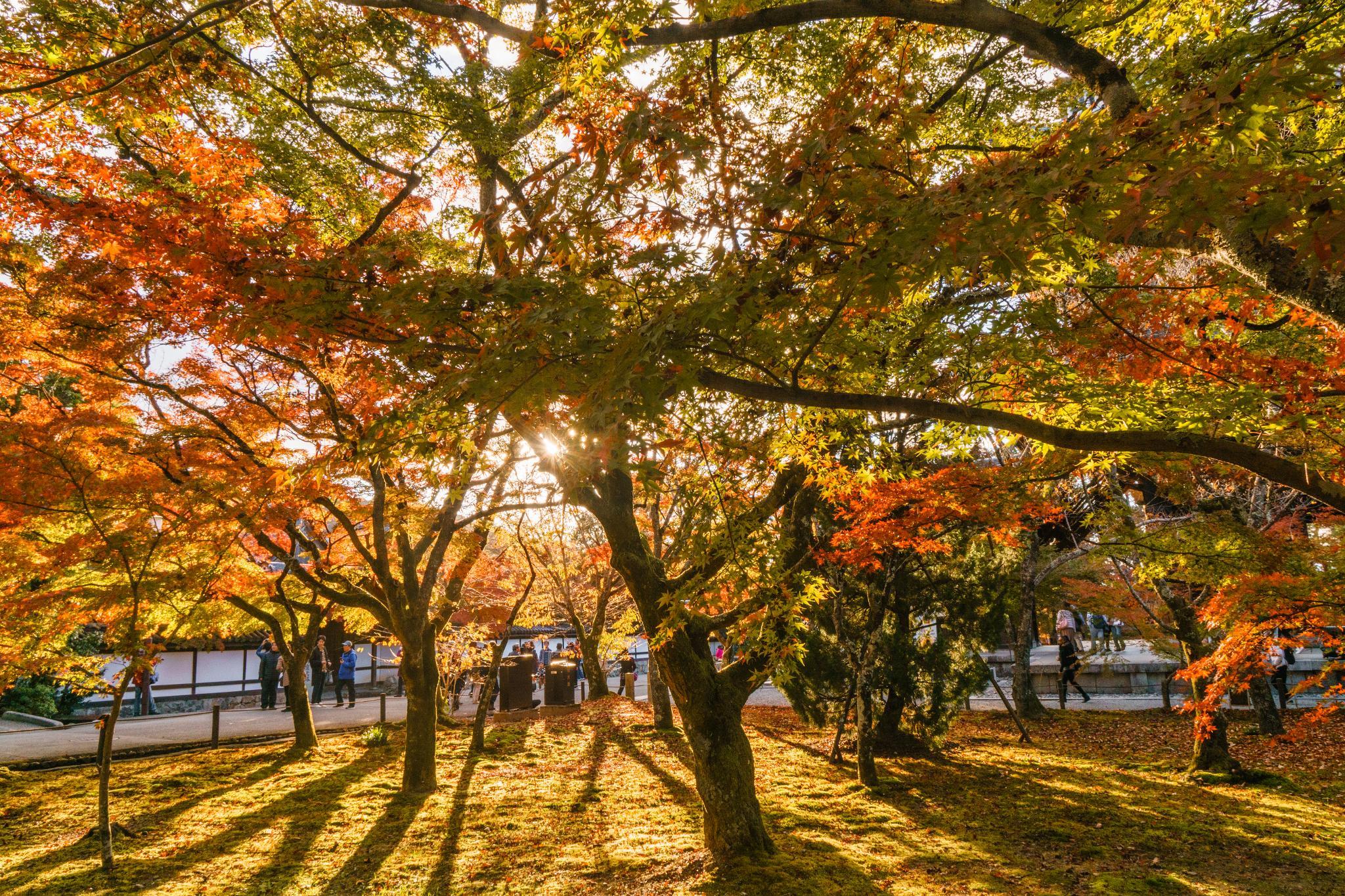 【京都】秋光葉影的古寺散策 - 南禪寺 87