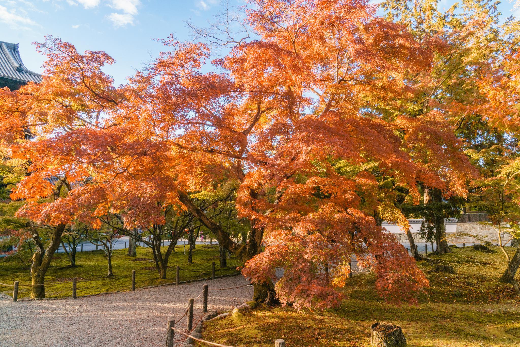 【京都】秋光葉影的古寺散策 - 南禪寺 88