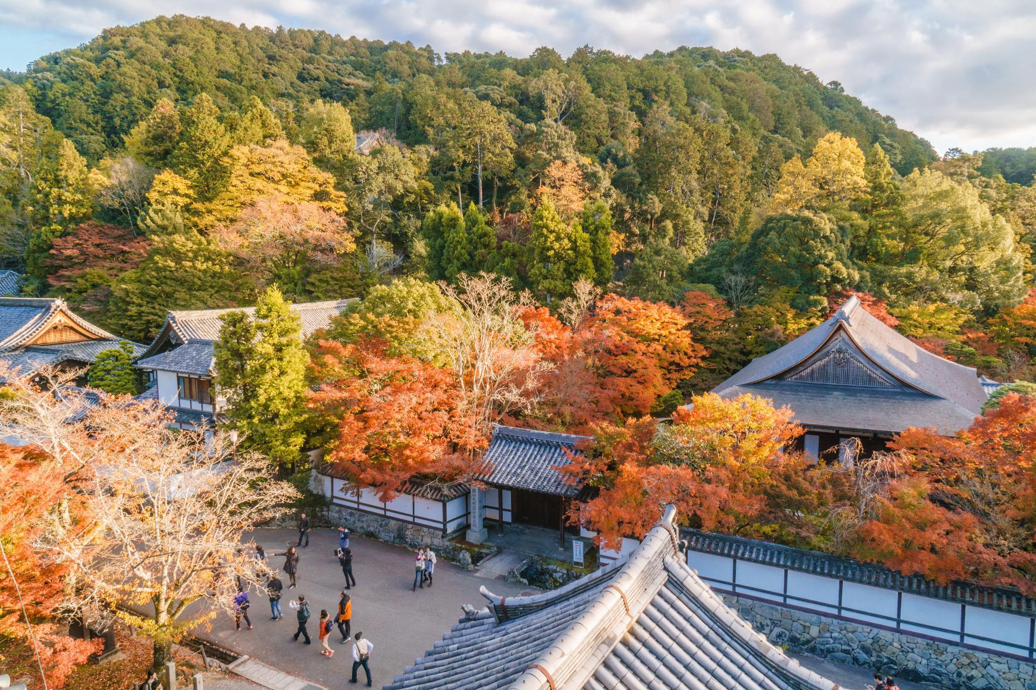 【京都】秋光葉影的古寺散策 - 南禪寺 92