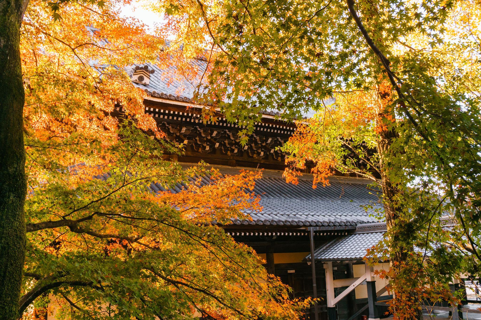 【京都】秋光葉影的古寺散策 - 南禪寺 110