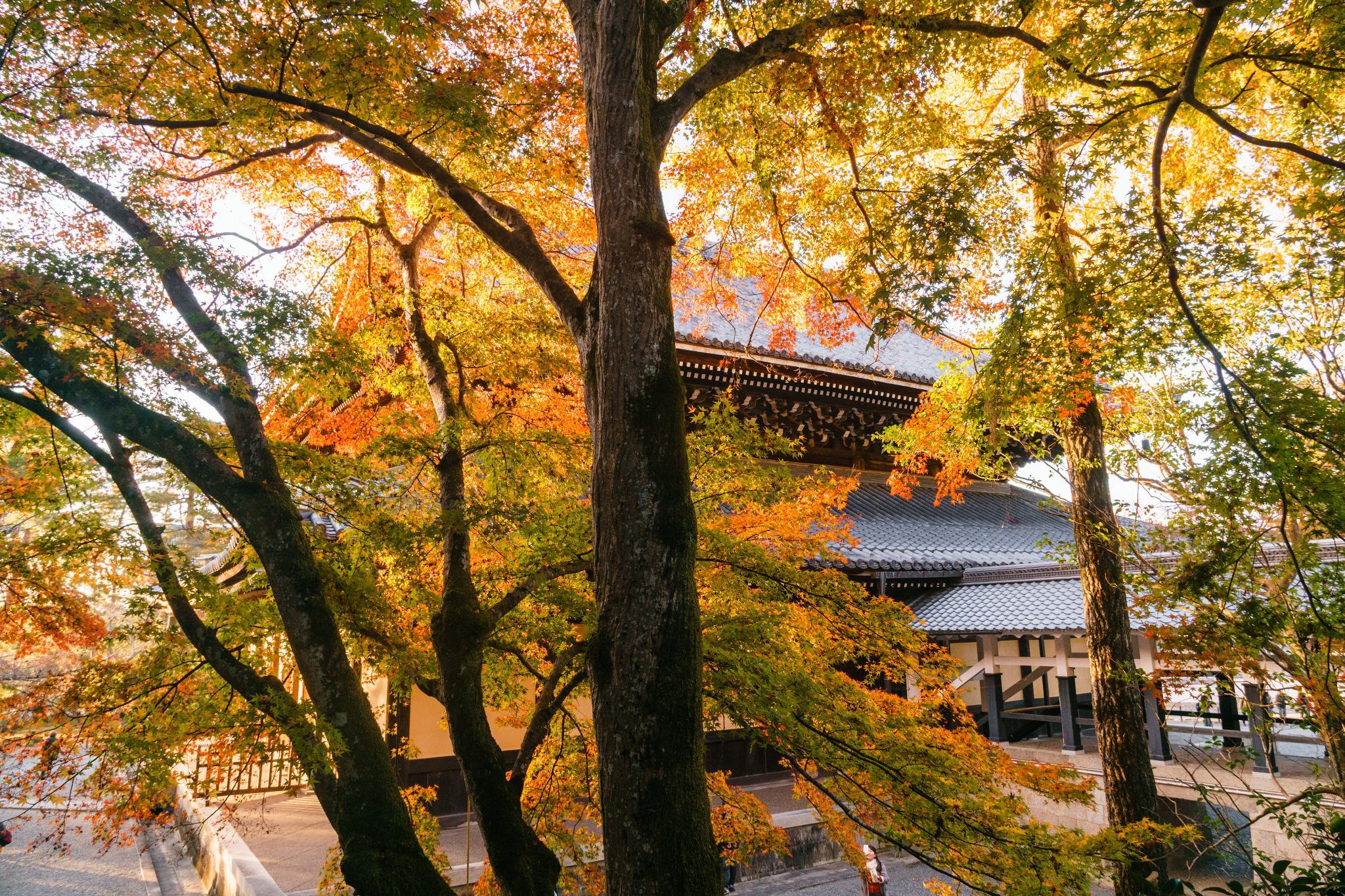 【京都】秋光葉影的古寺散策 - 南禪寺 109