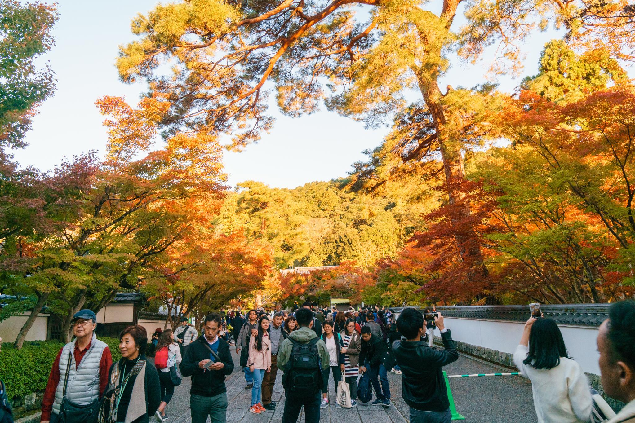 【京都】此生必來的紅葉狩絕景 - 永觀堂夜楓 99