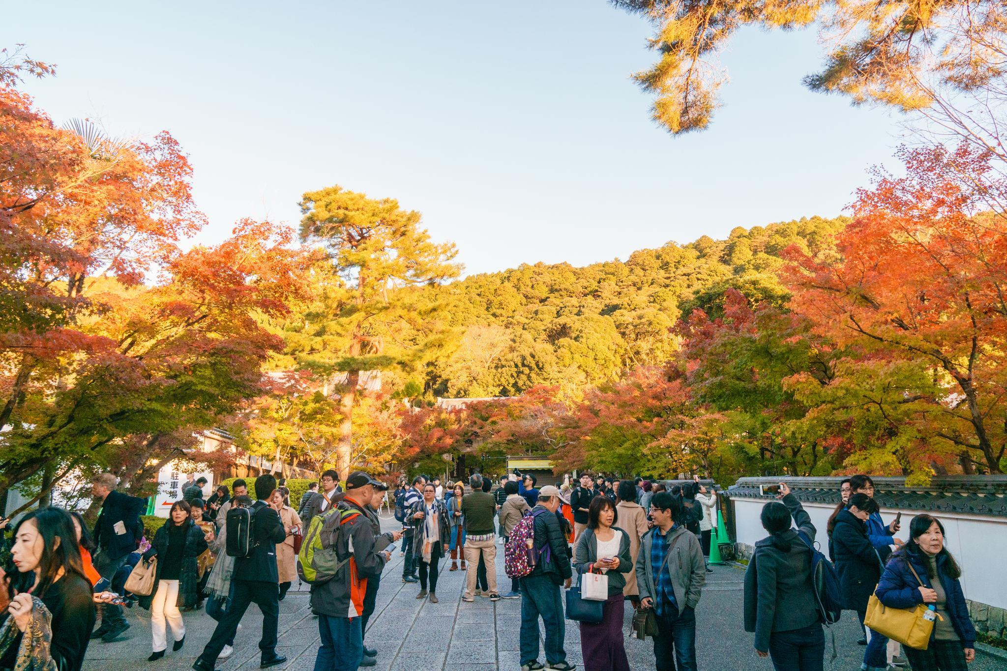 【京都】此生必來的紅葉狩絕景 - 永觀堂夜楓 100