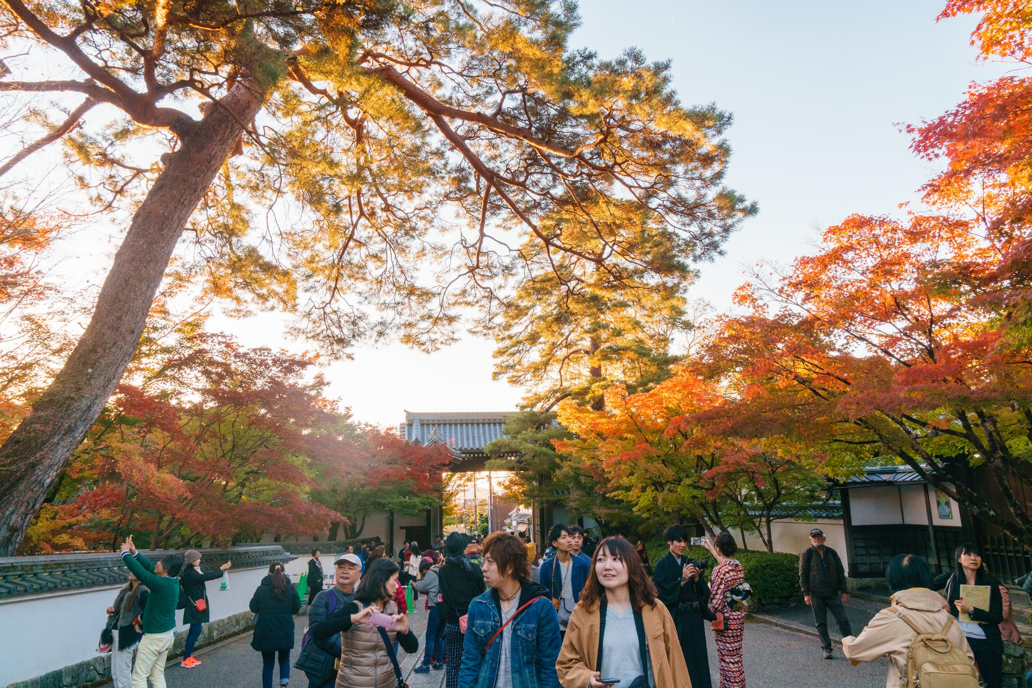 【京都】此生必來的紅葉狩絕景 - 永觀堂夜楓 101
