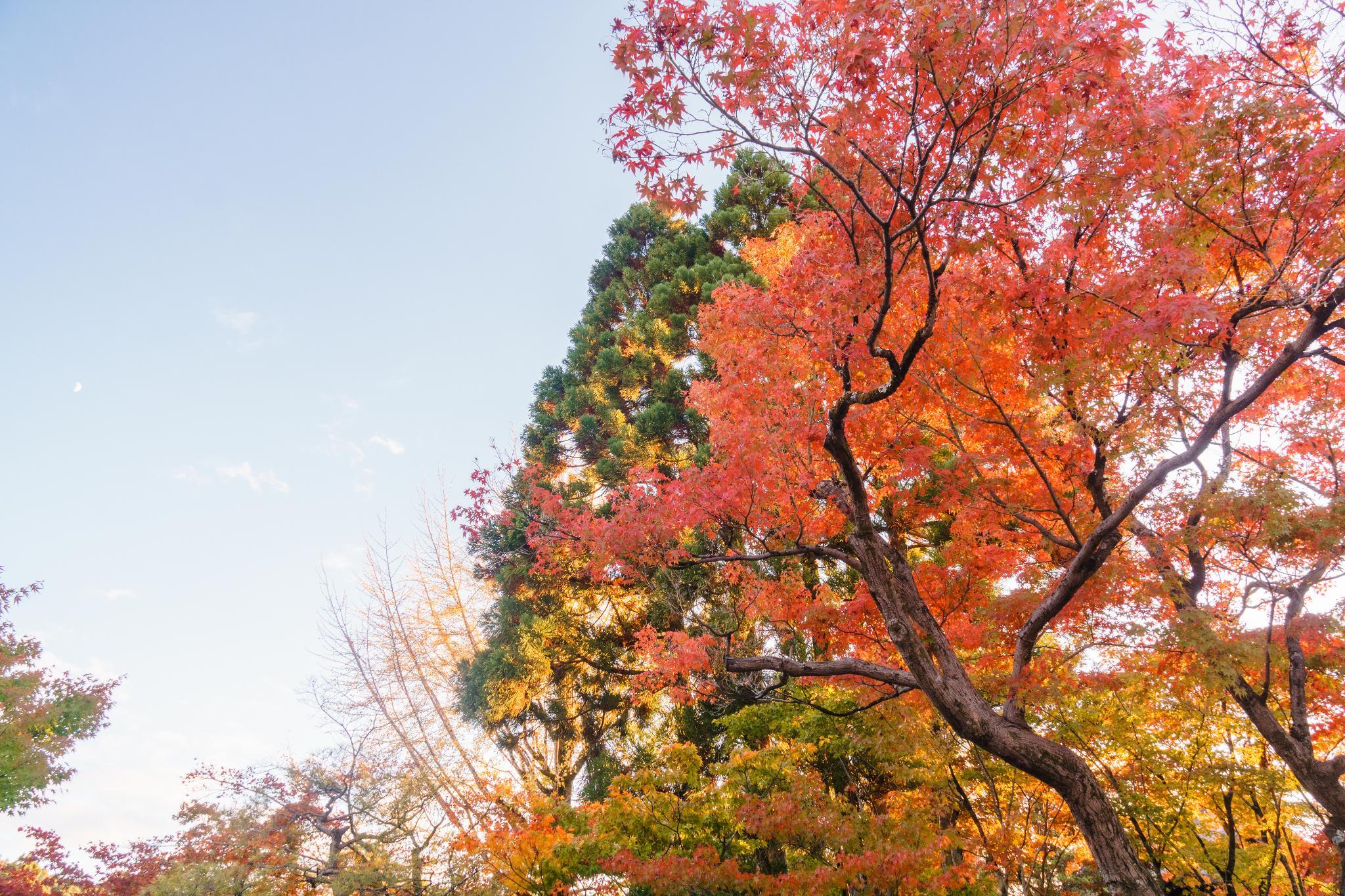 【京都】此生必來的紅葉狩絕景 - 永觀堂夜楓 104