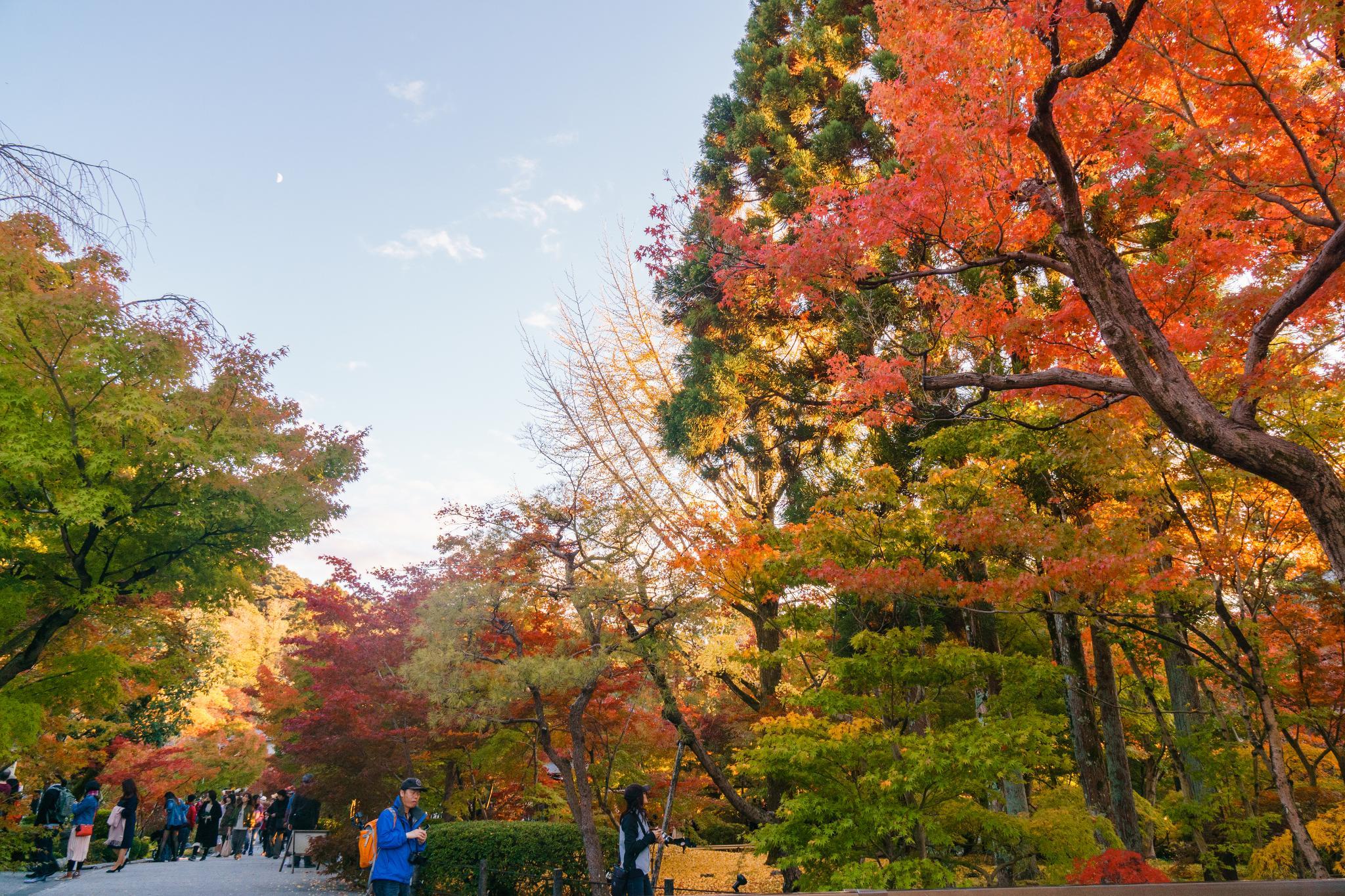 【京都】此生必來的紅葉狩絕景 - 永觀堂夜楓 102