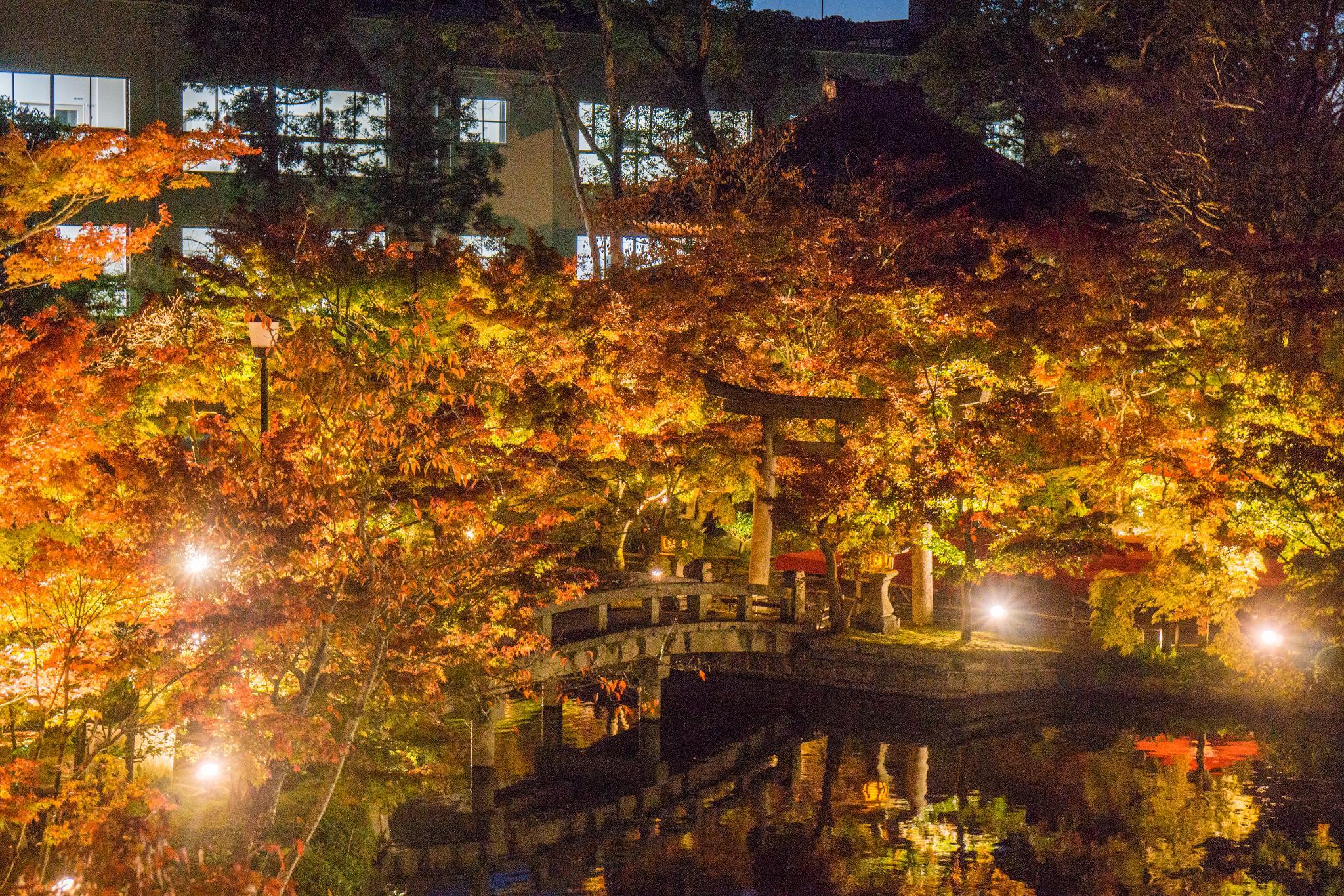 【京都】此生必來的紅葉狩絕景 - 永觀堂夜楓 107