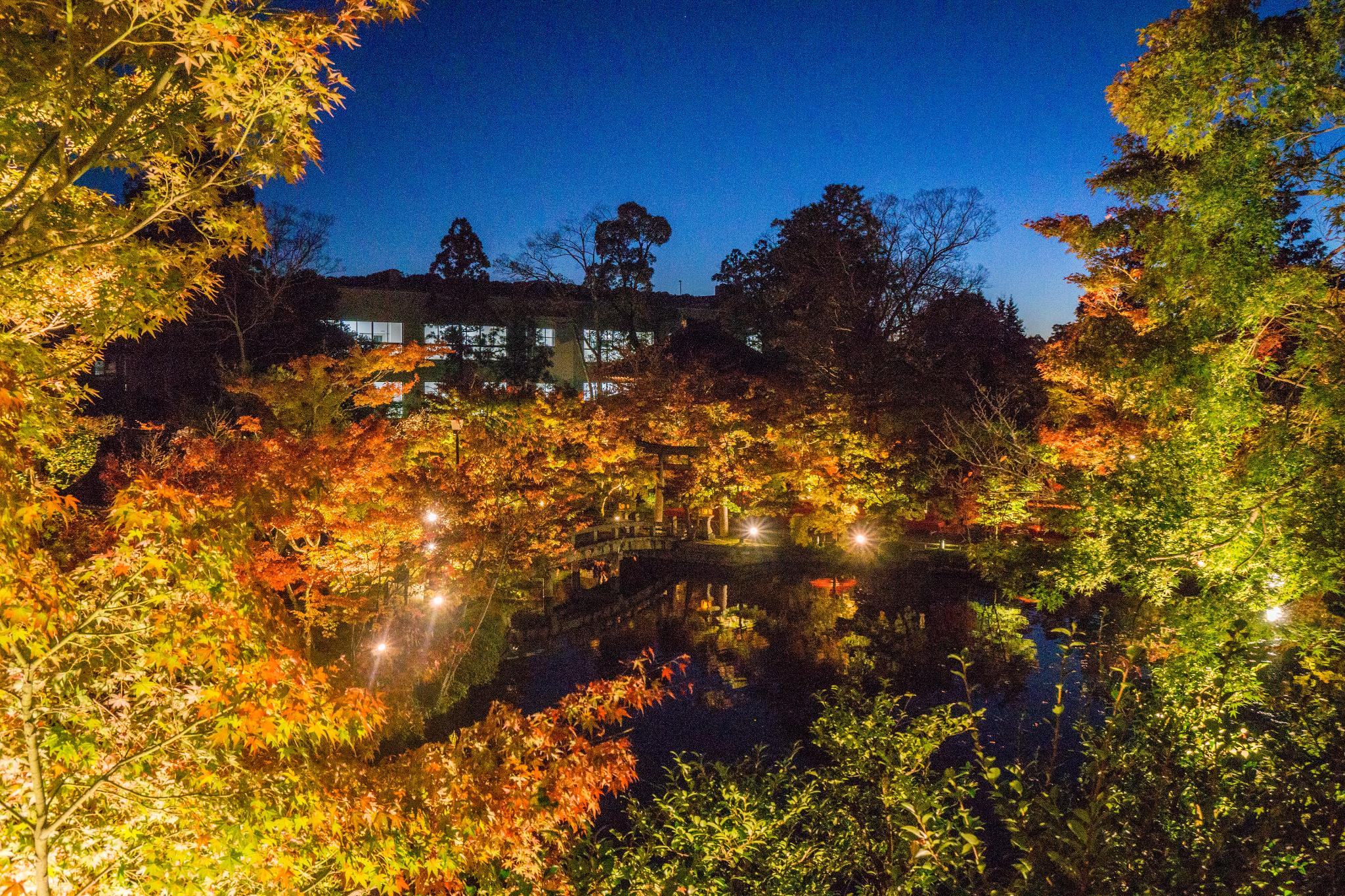 【京都】此生必來的紅葉狩絕景 - 永觀堂夜楓 108