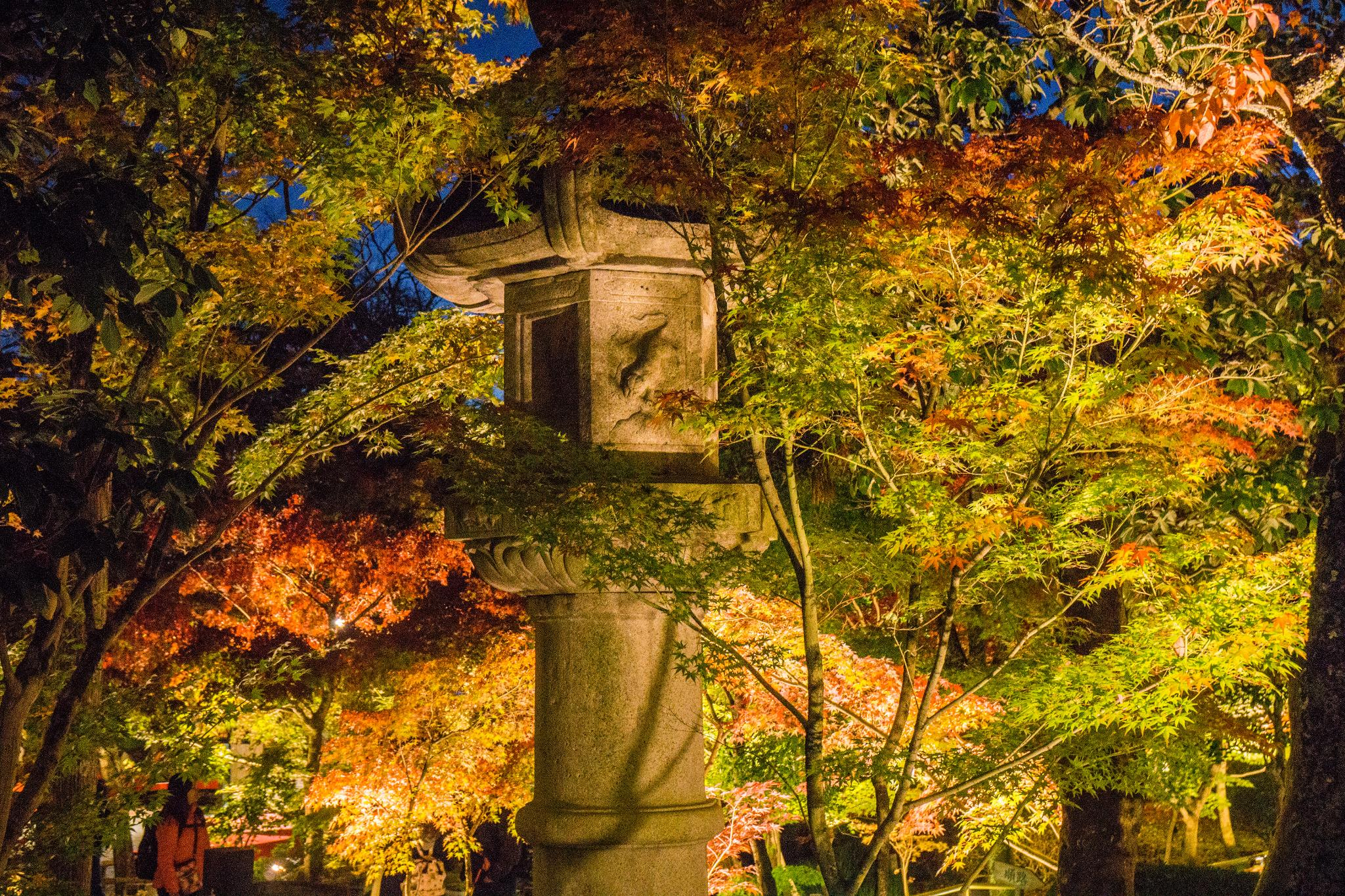 【京都】此生必來的紅葉狩絕景 - 永觀堂夜楓 109