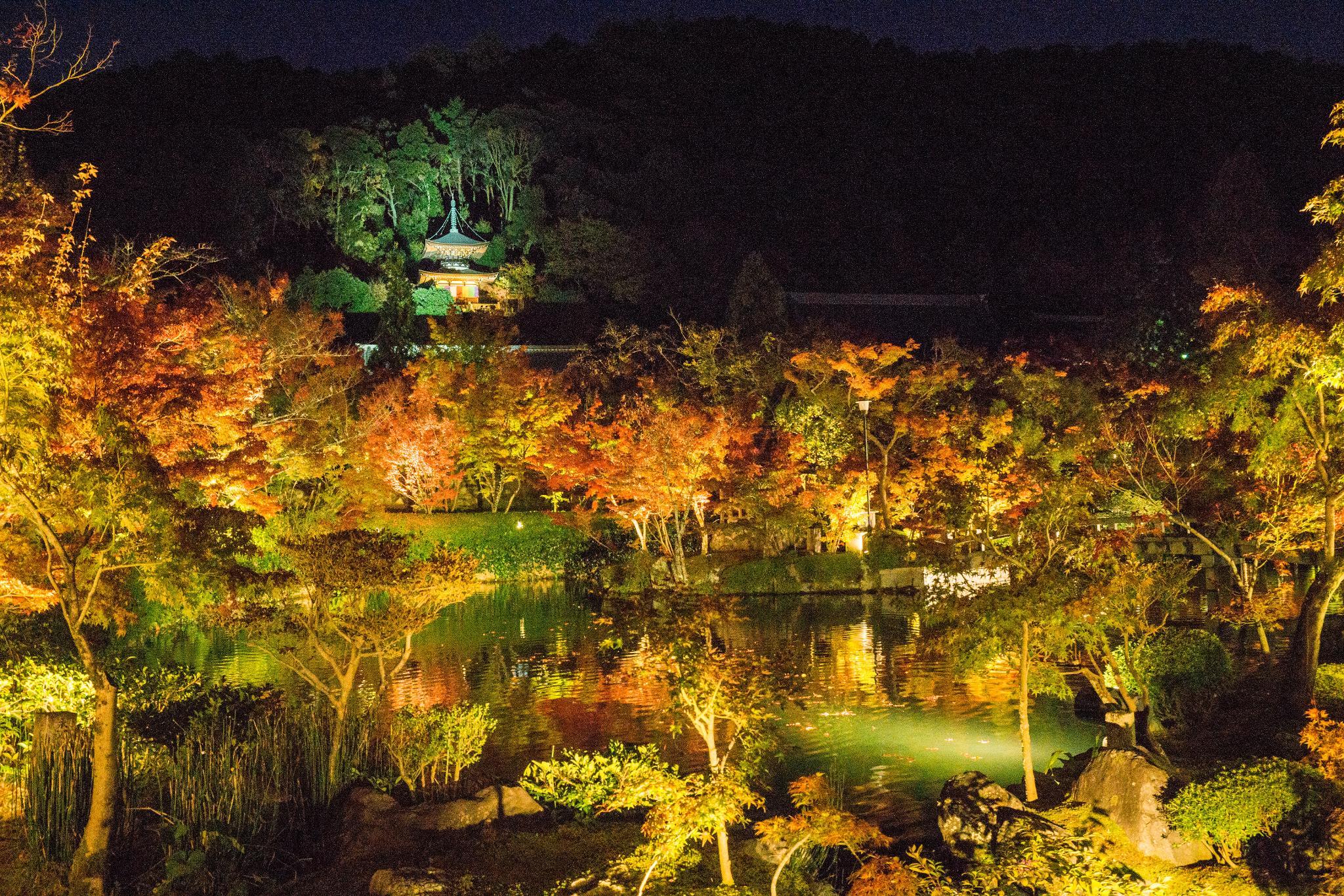 【京都】此生必來的紅葉狩絕景 - 永觀堂夜楓 111