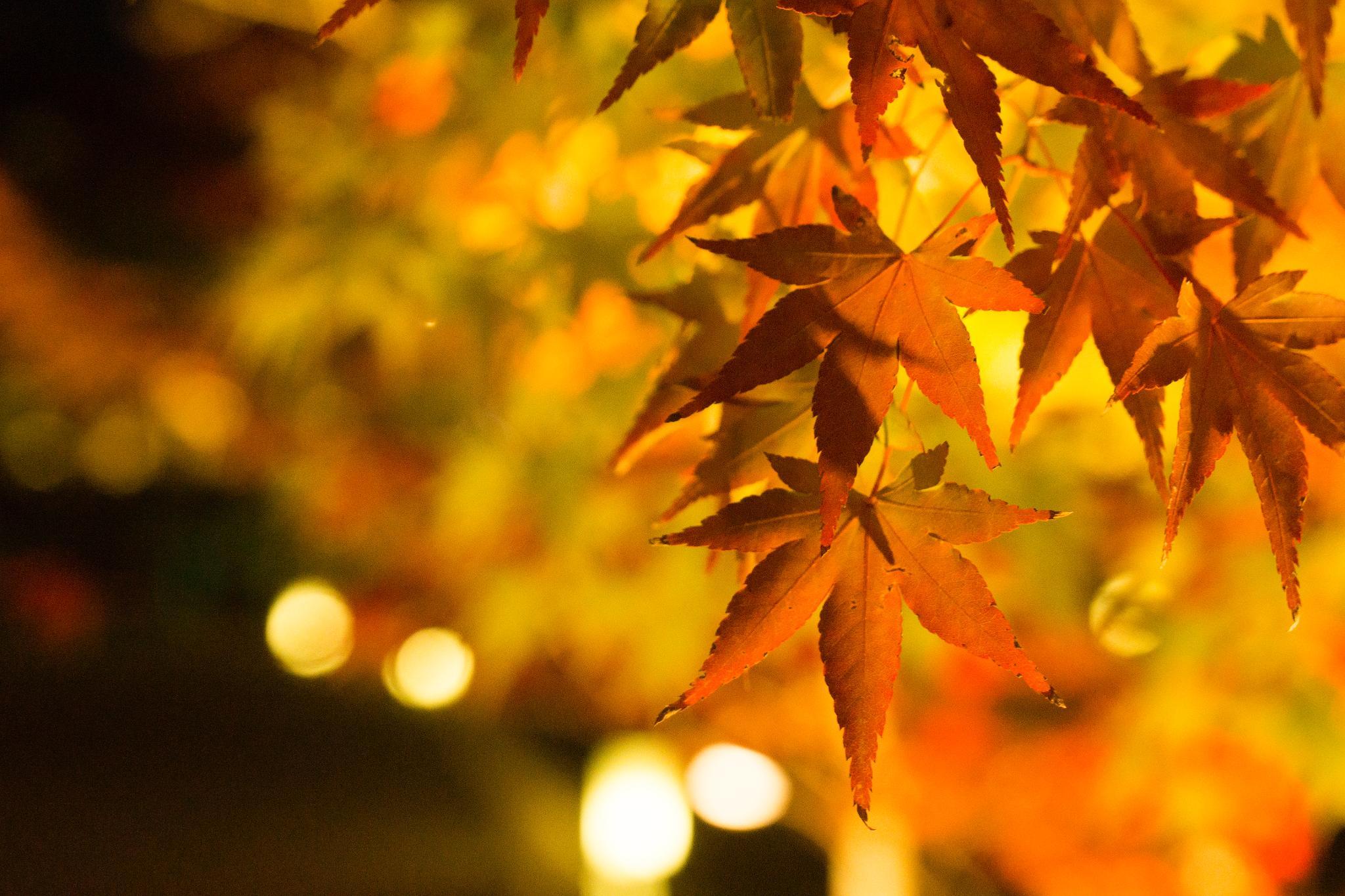 【京都】此生必來的紅葉狩絕景 - 永觀堂夜楓 138