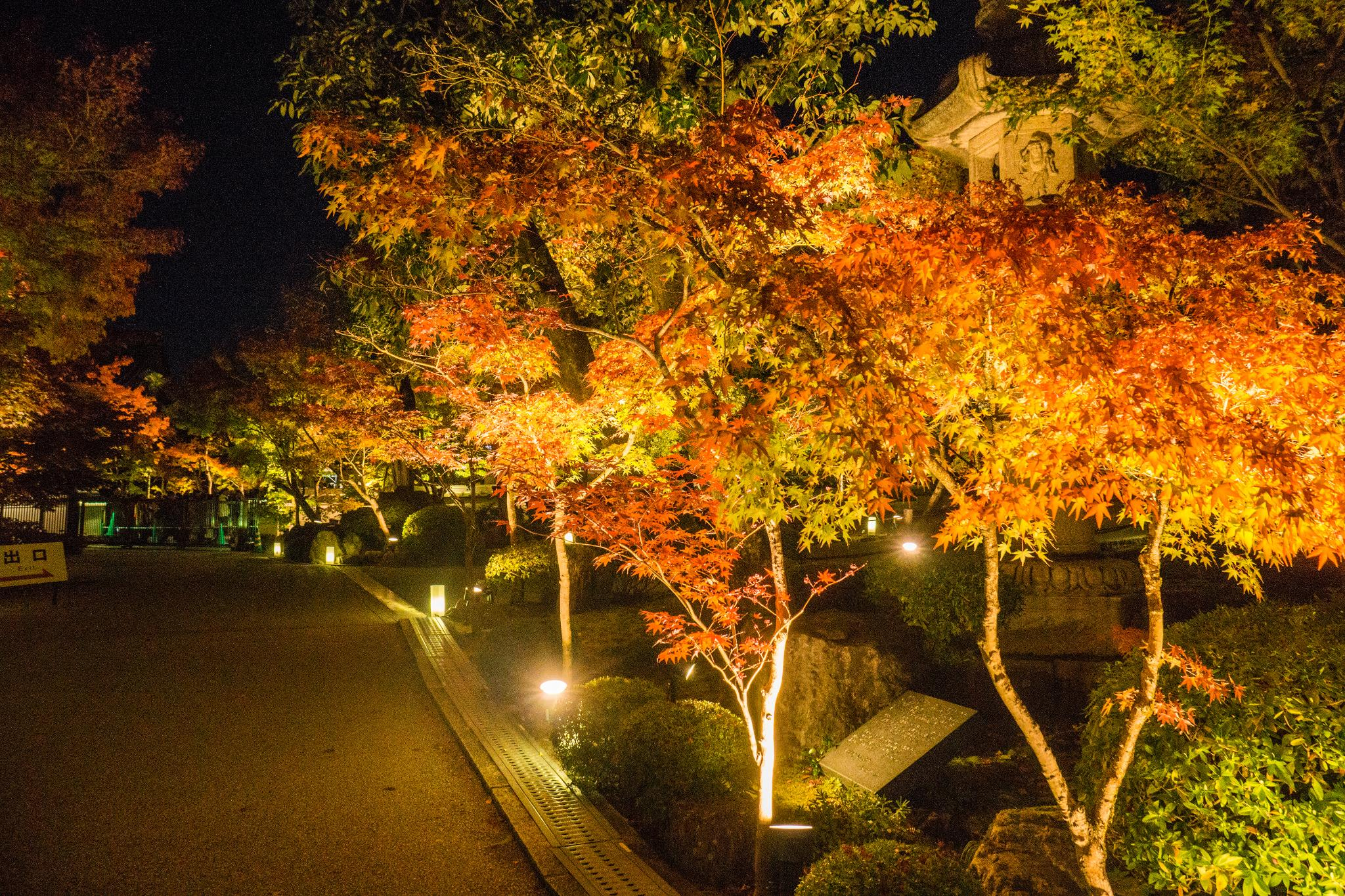 【京都】此生必來的紅葉狩絕景 - 永觀堂夜楓 110