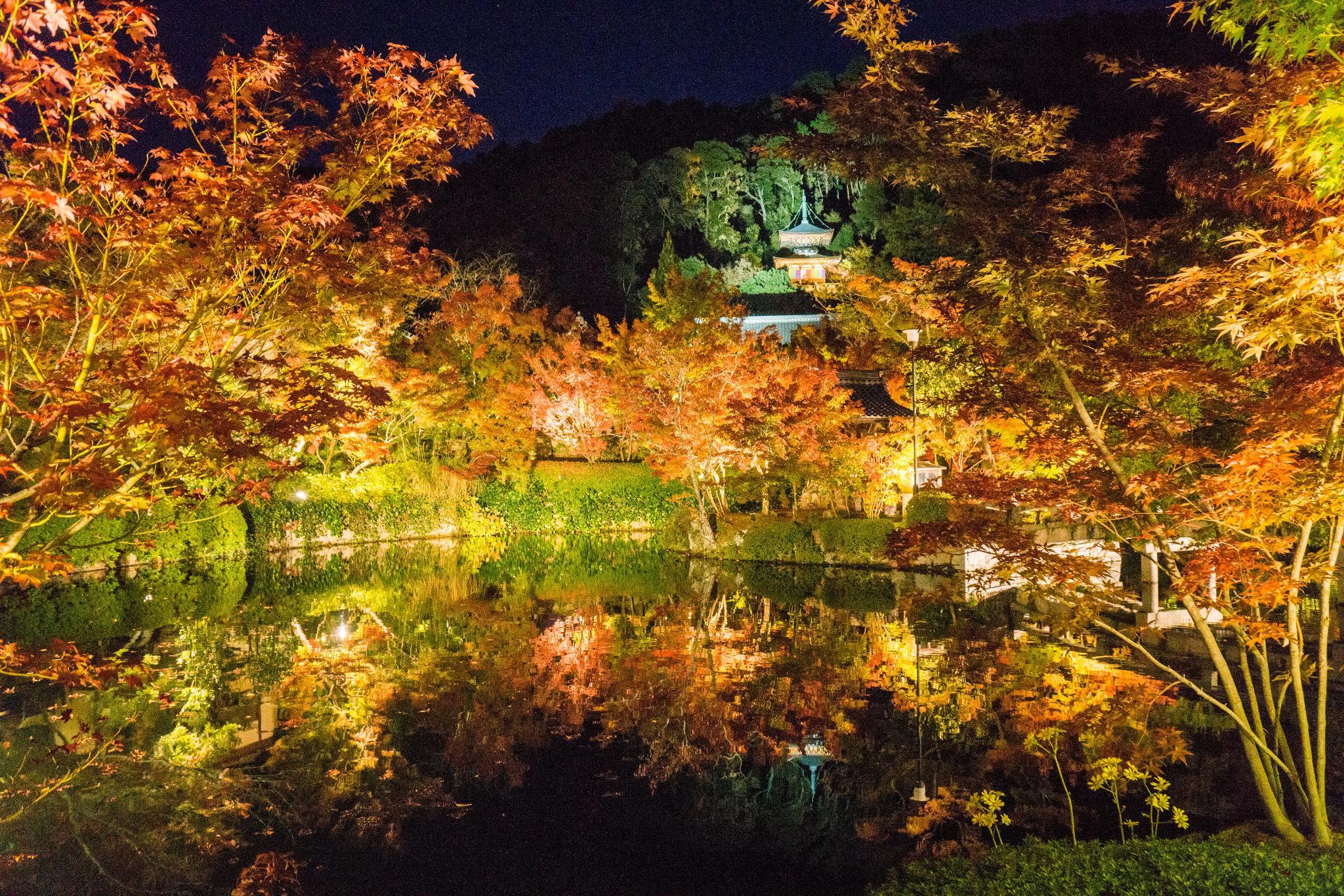 【京都】此生必來的紅葉狩絕景 - 永觀堂夜楓 112