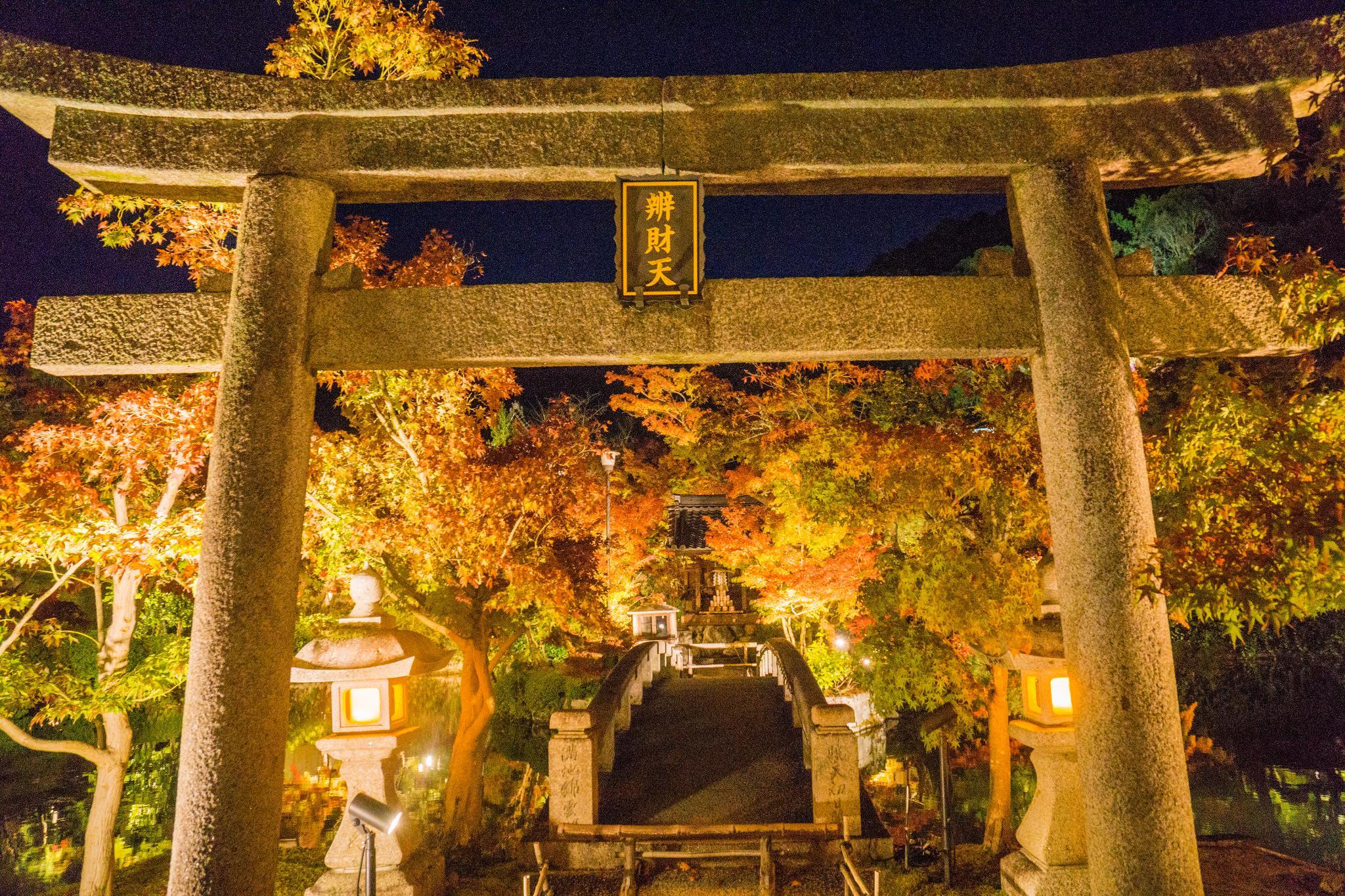 【京都】此生必來的紅葉狩絕景 - 永觀堂夜楓 113