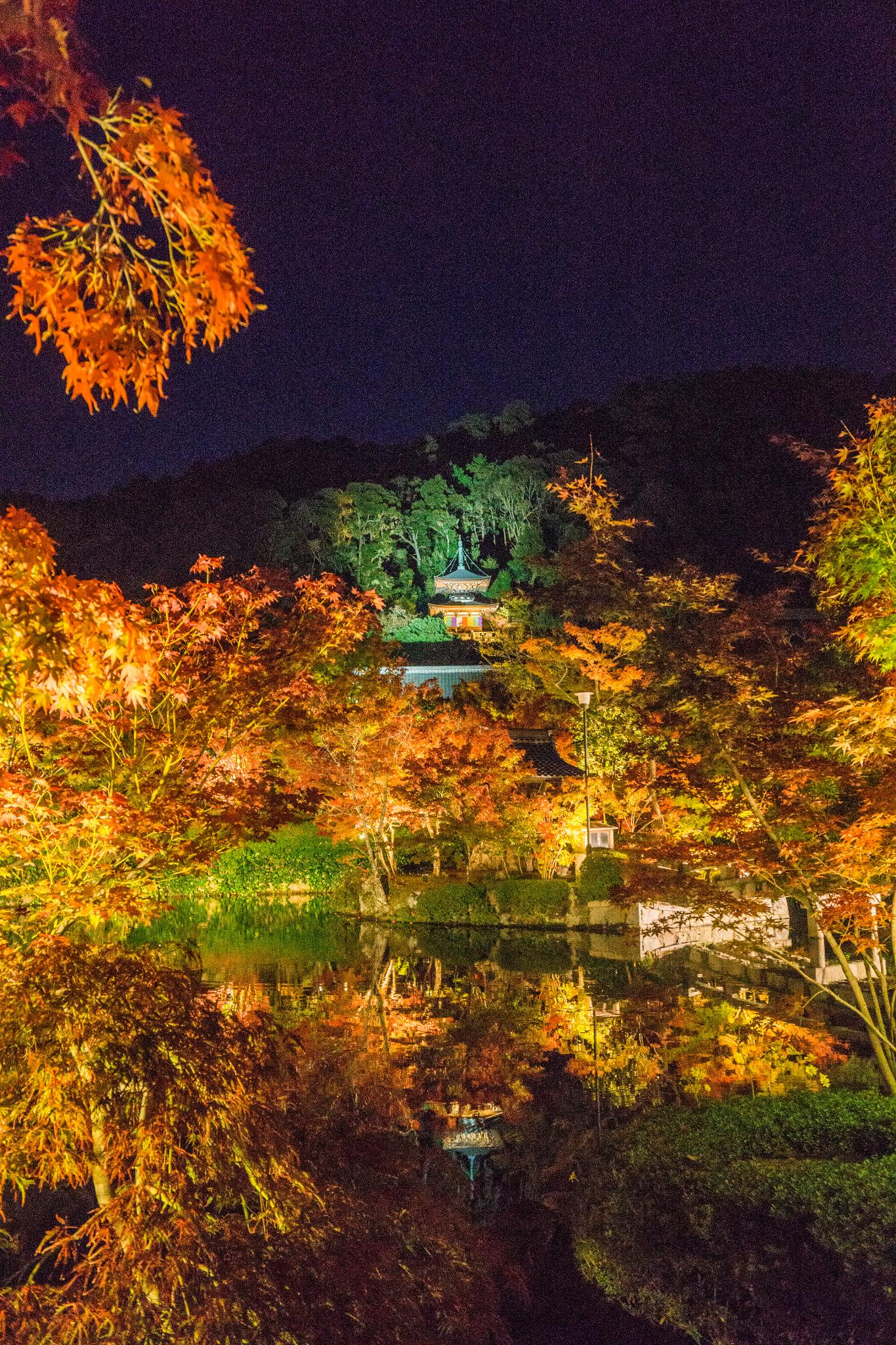 【京都】此生必來的紅葉狩絕景 - 永觀堂夜楓 97