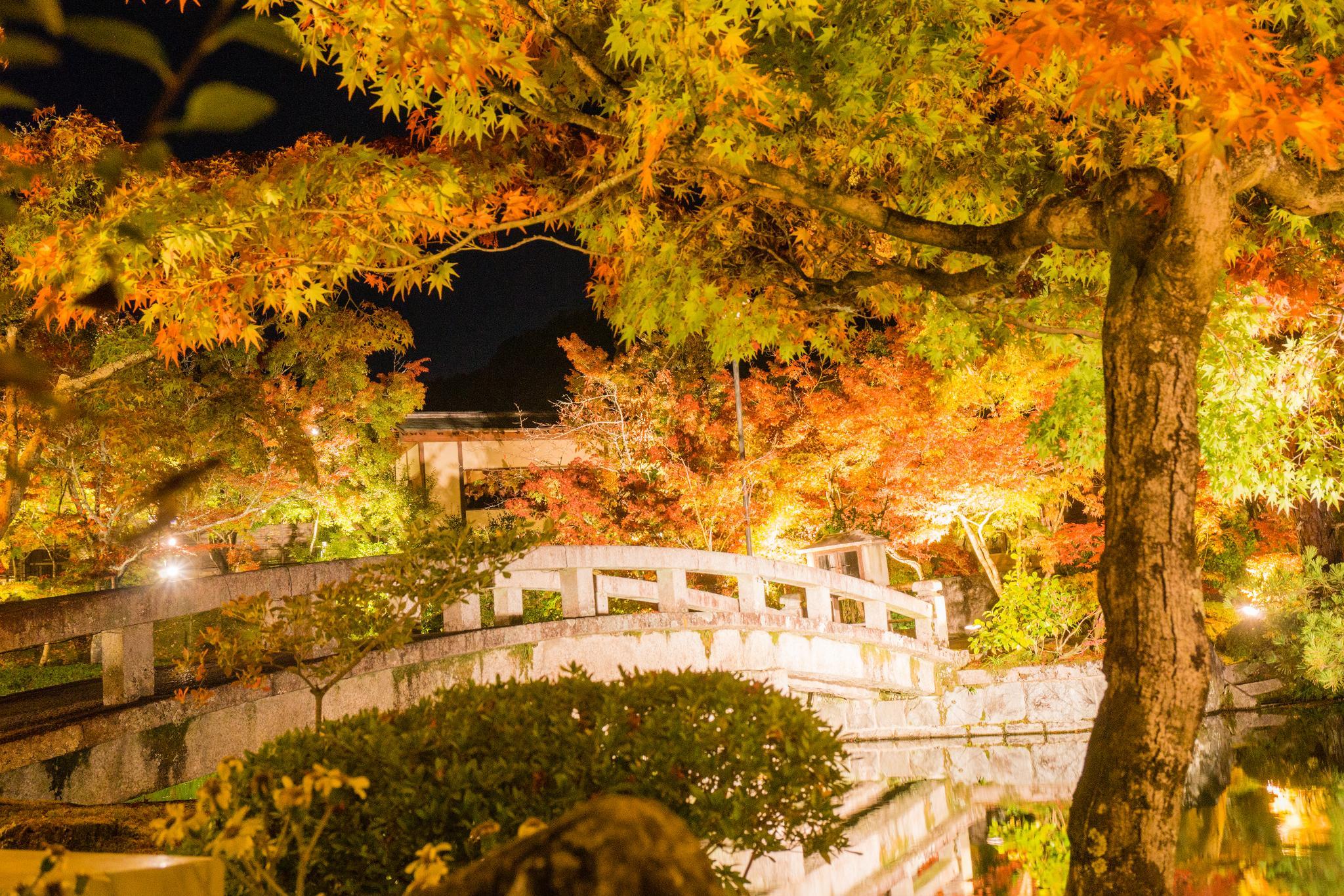 【京都】此生必來的紅葉狩絕景 - 永觀堂夜楓 114