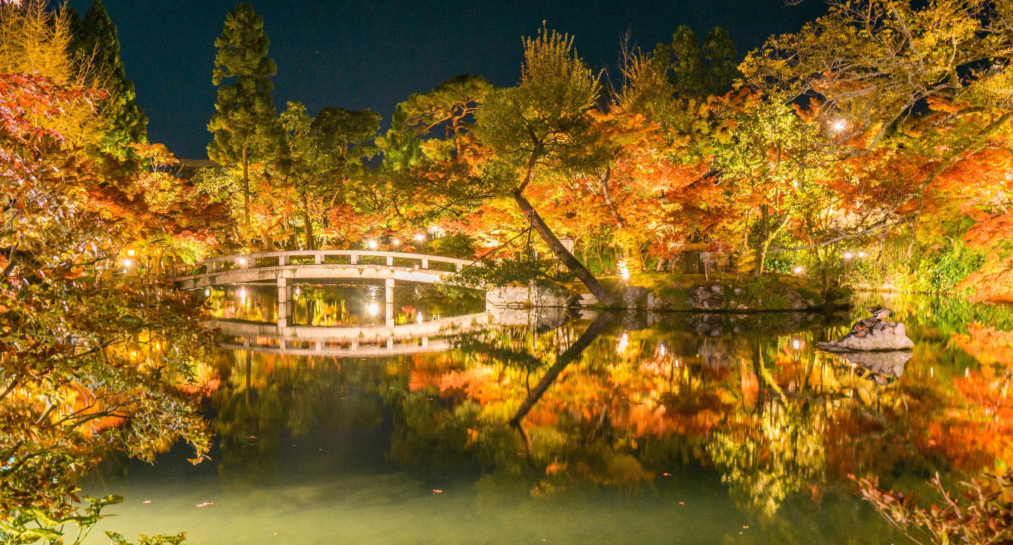 【京都】此生必來的紅葉狩絕景 - 永觀堂夜楓 120