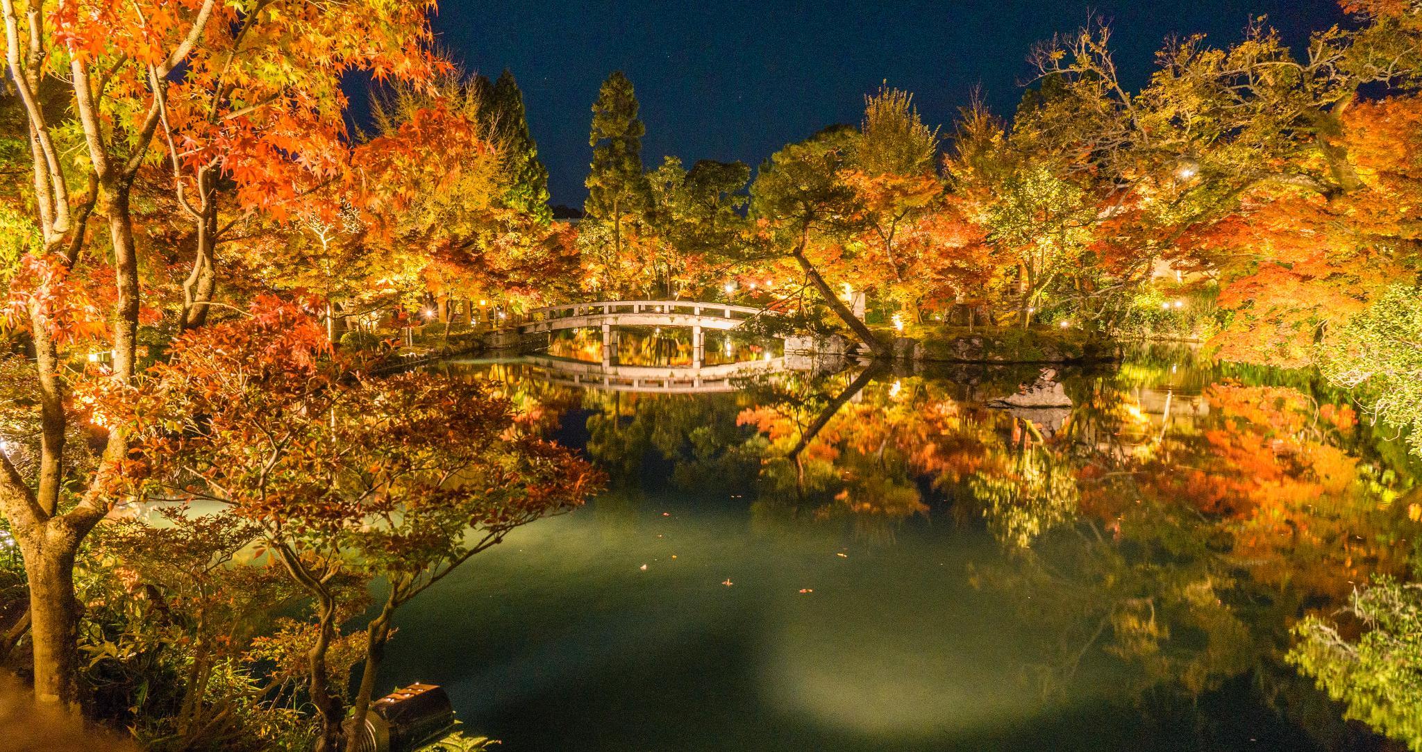 【京都】此生必來的紅葉狩絕景 - 永觀堂夜楓 119