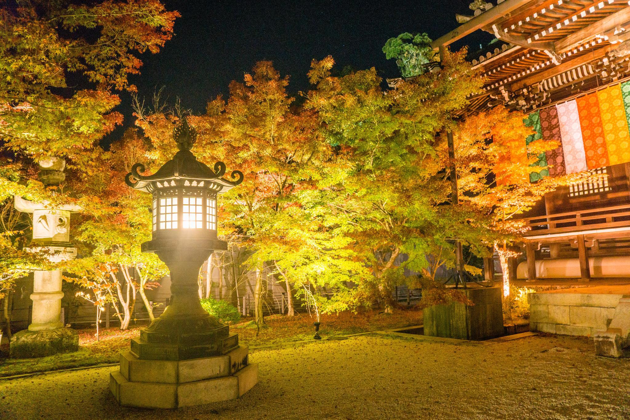【京都】此生必來的紅葉狩絕景 - 永觀堂夜楓 121