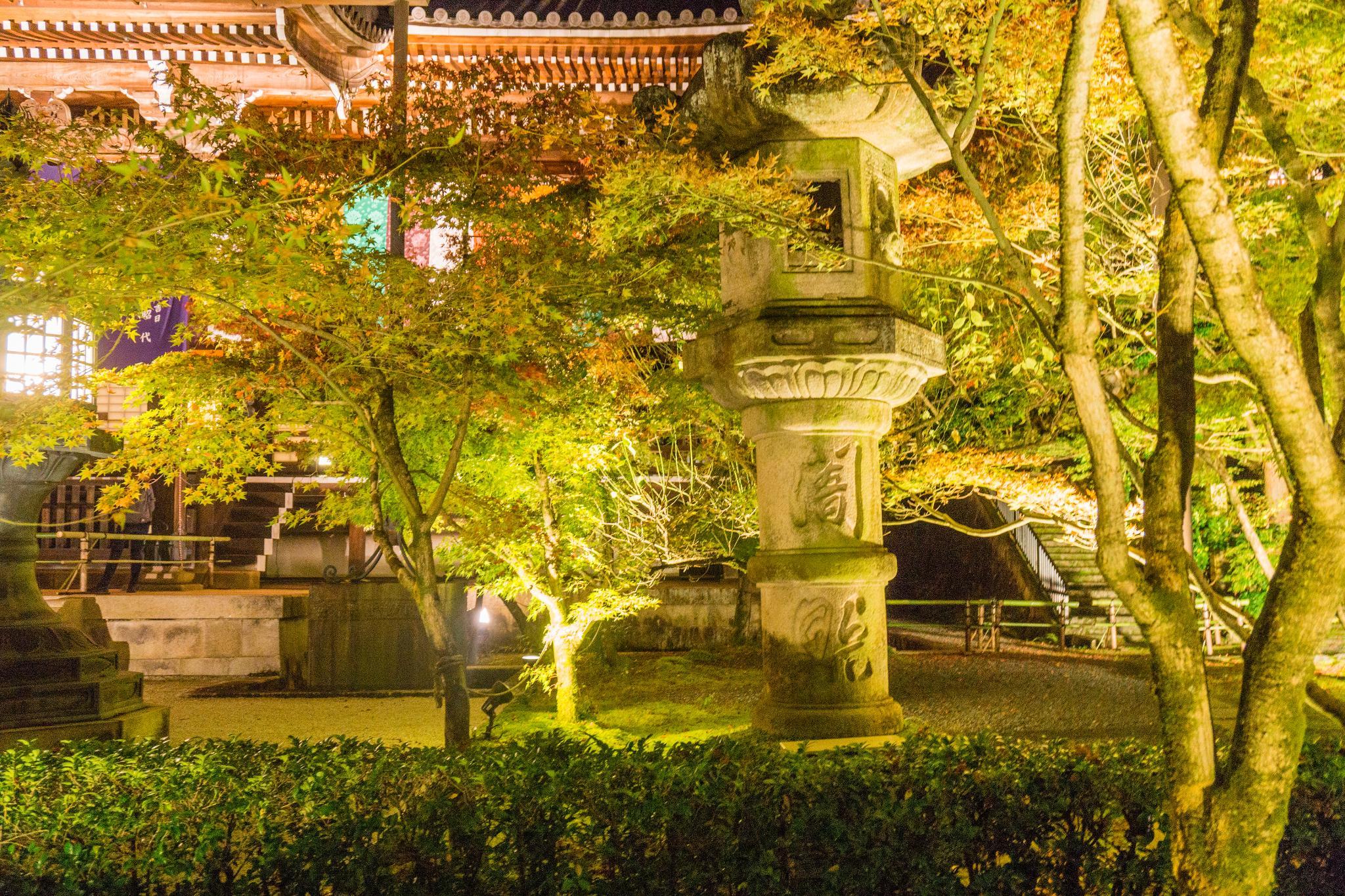 【京都】此生必來的紅葉狩絕景 - 永觀堂夜楓 124