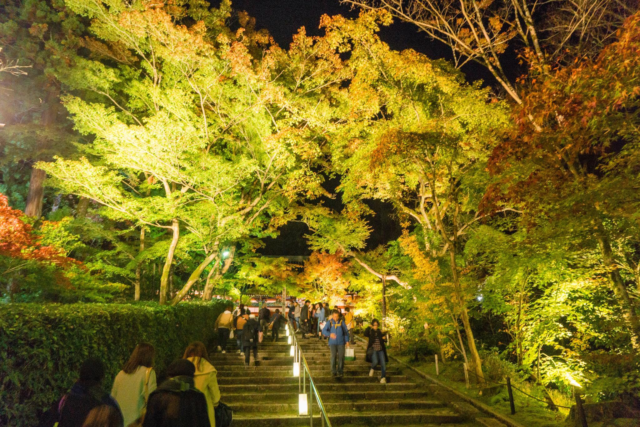 【京都】此生必來的紅葉狩絕景 - 永觀堂夜楓 125