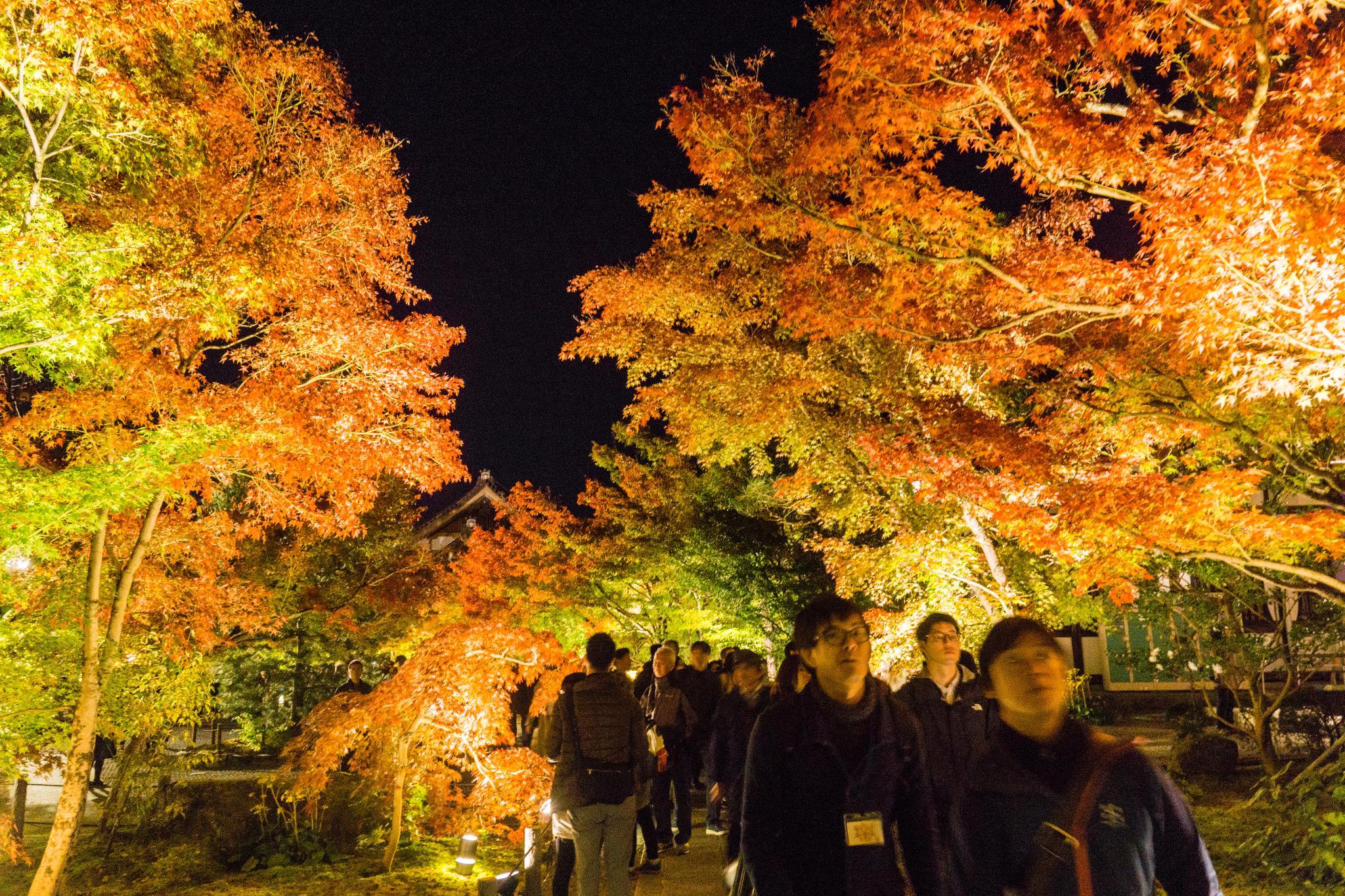 【京都】此生必來的紅葉狩絕景 - 永觀堂夜楓 128