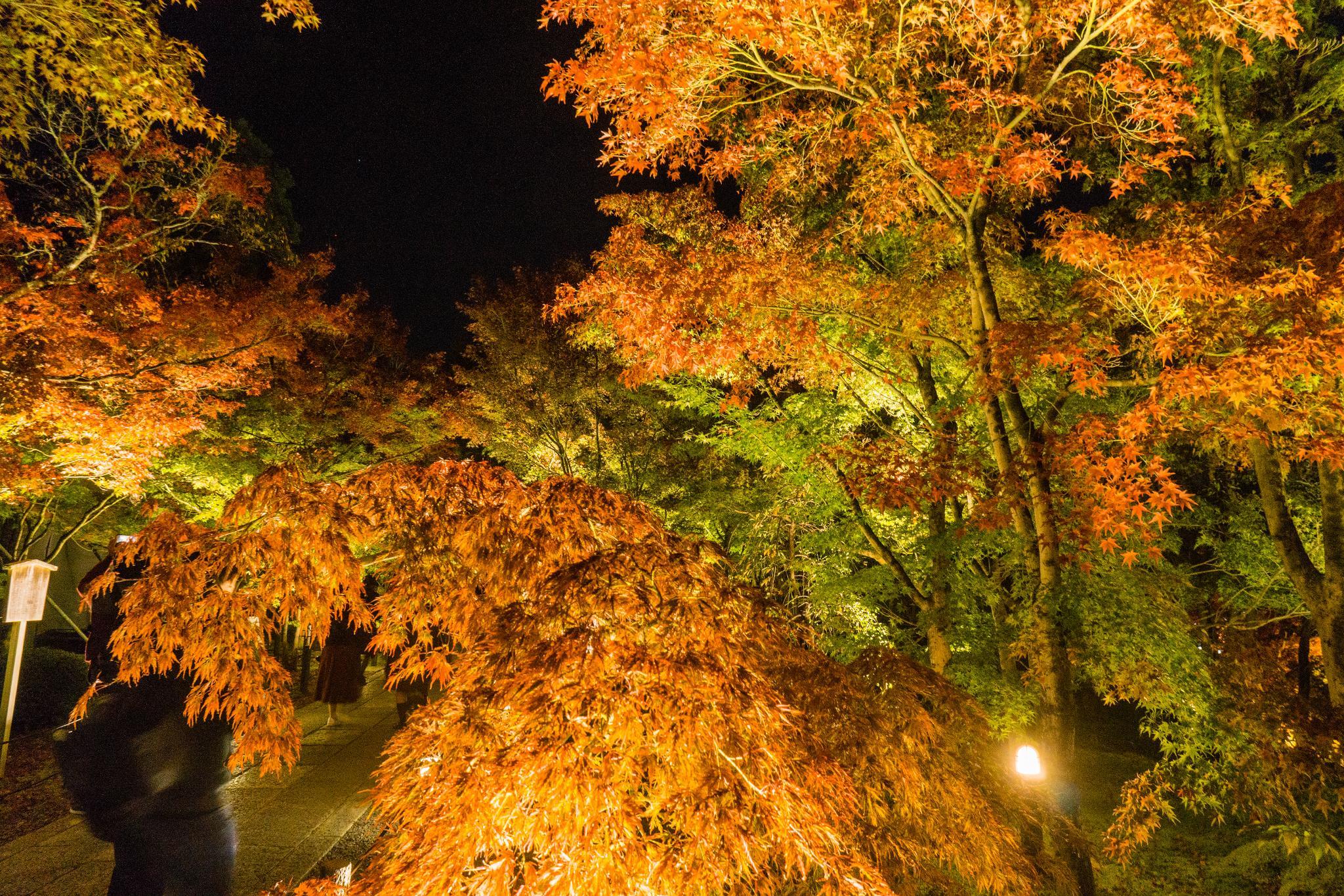 【京都】此生必來的紅葉狩絕景 - 永觀堂夜楓 131