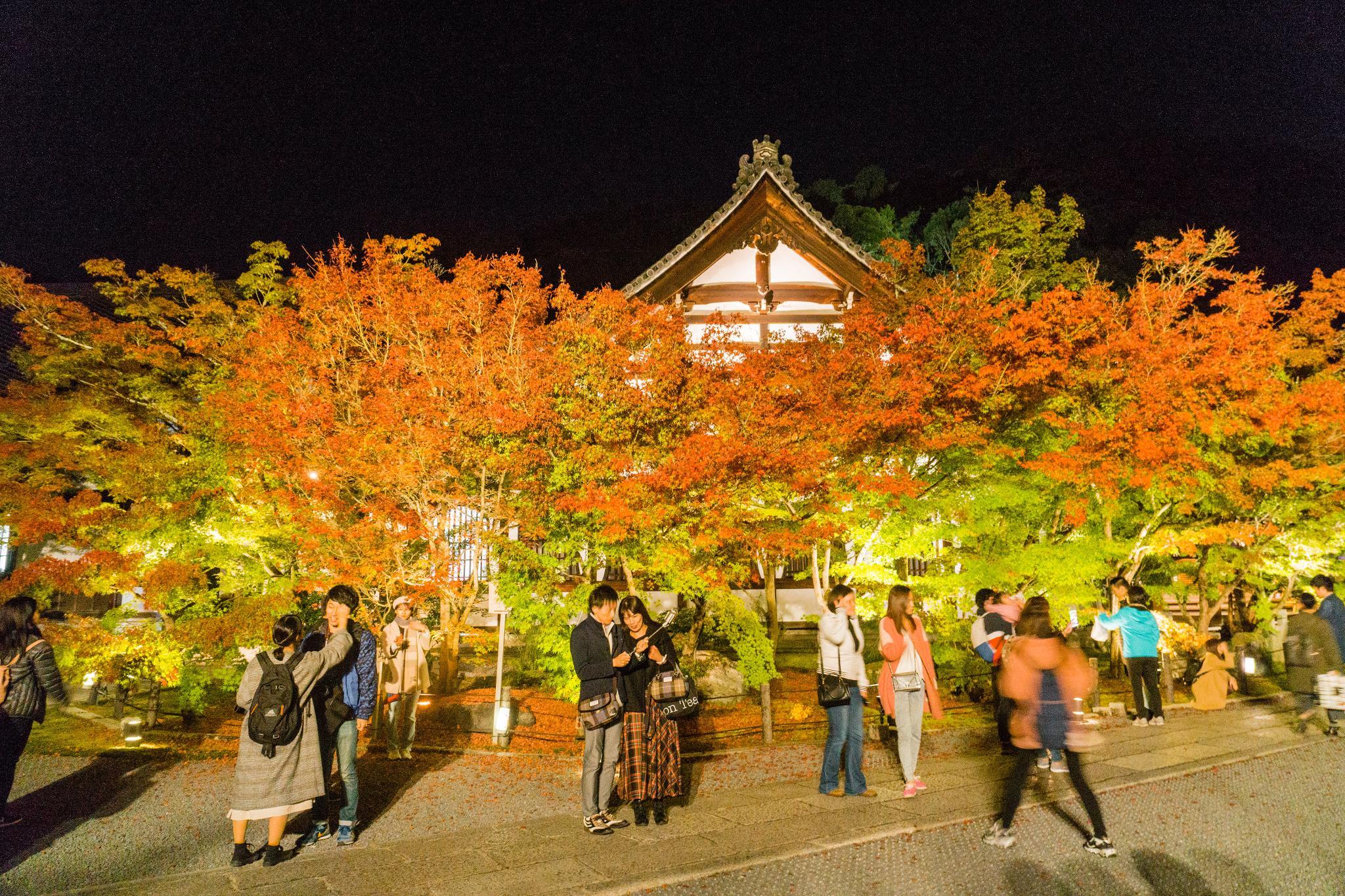 【京都】此生必來的紅葉狩絕景 - 永觀堂夜楓 130