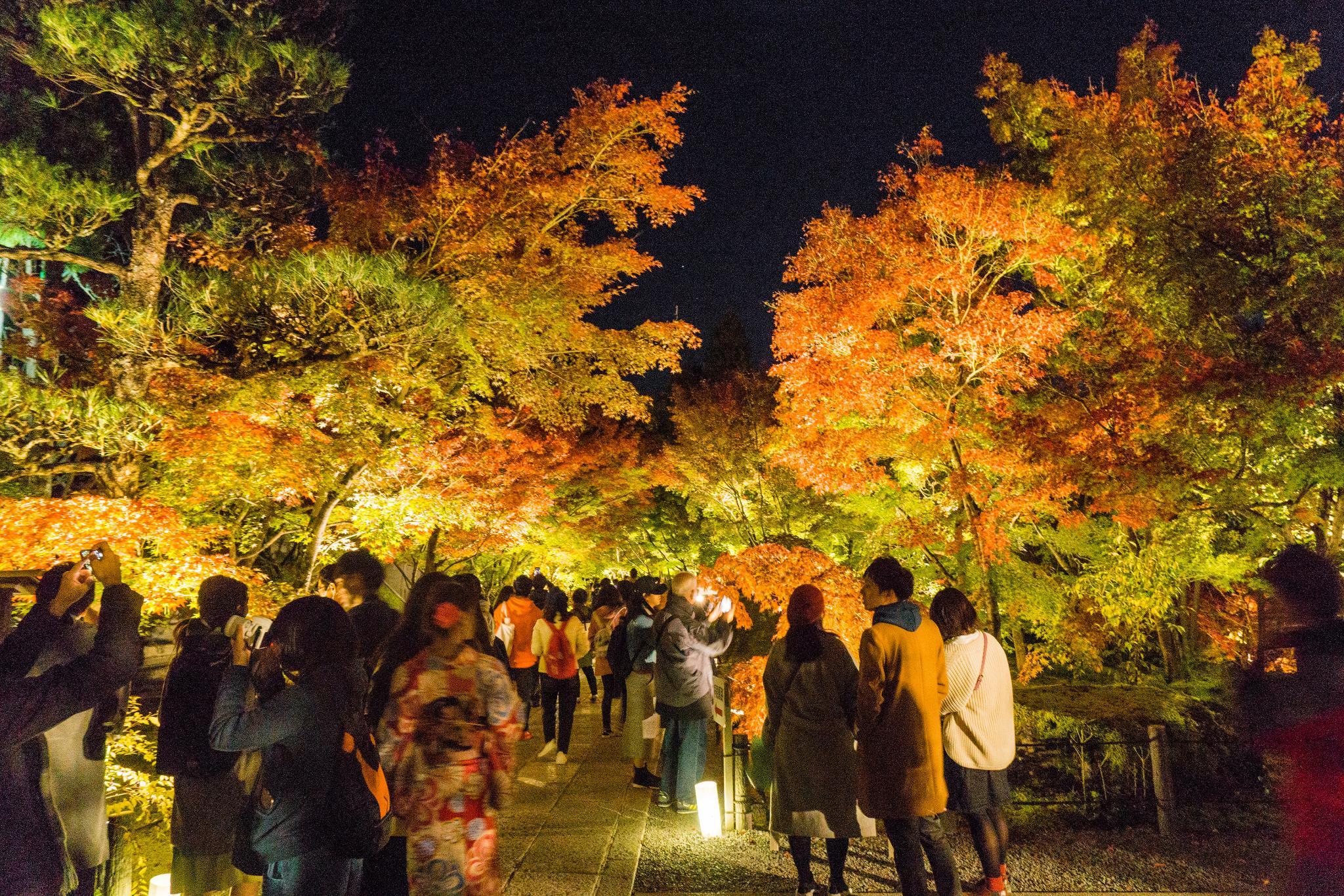 【京都】此生必來的紅葉狩絕景 - 永觀堂夜楓 129
