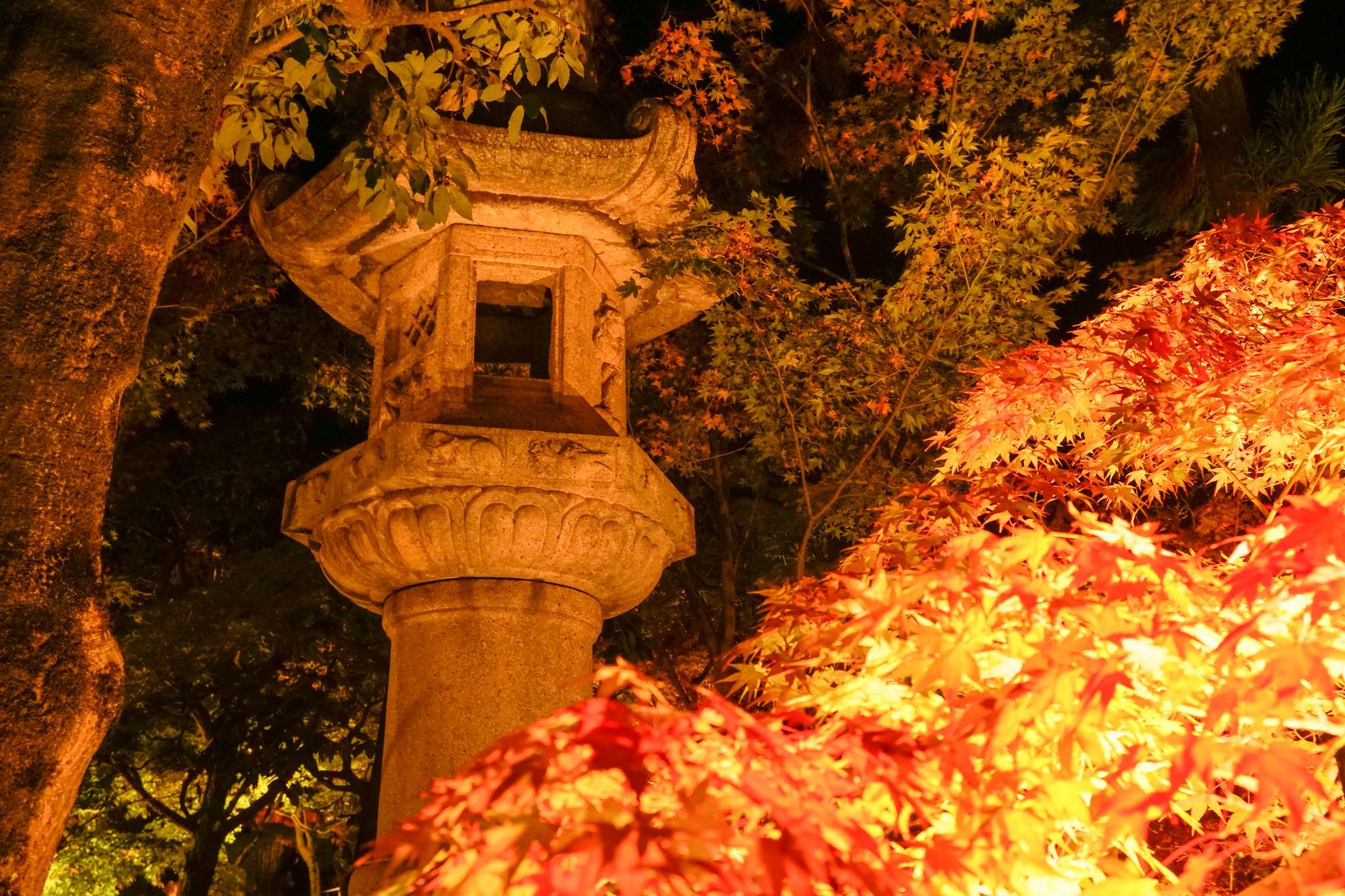 【京都】此生必來的紅葉狩絕景 - 永觀堂夜楓 116