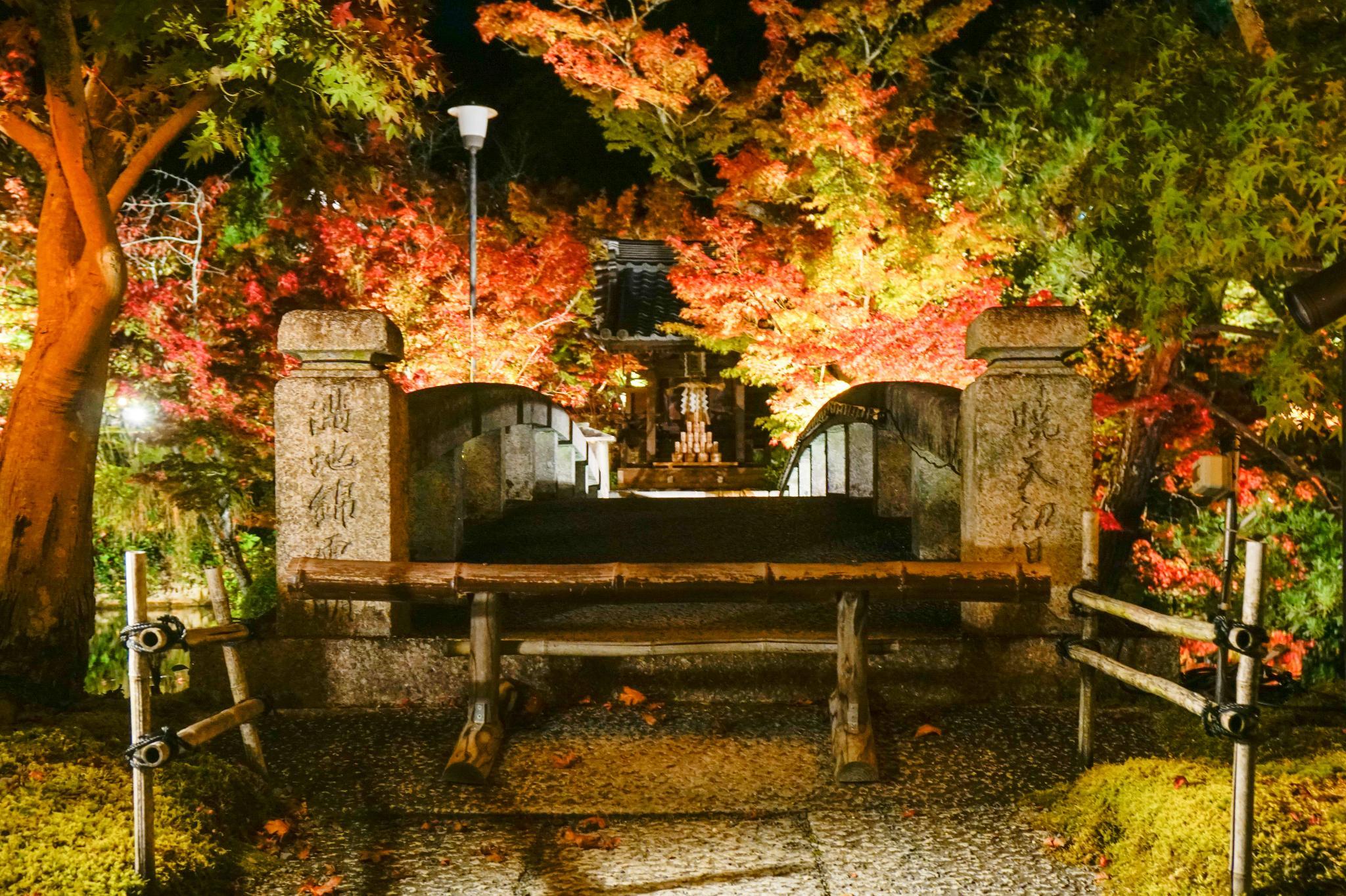 【京都】此生必來的紅葉狩絕景 - 永觀堂夜楓 115